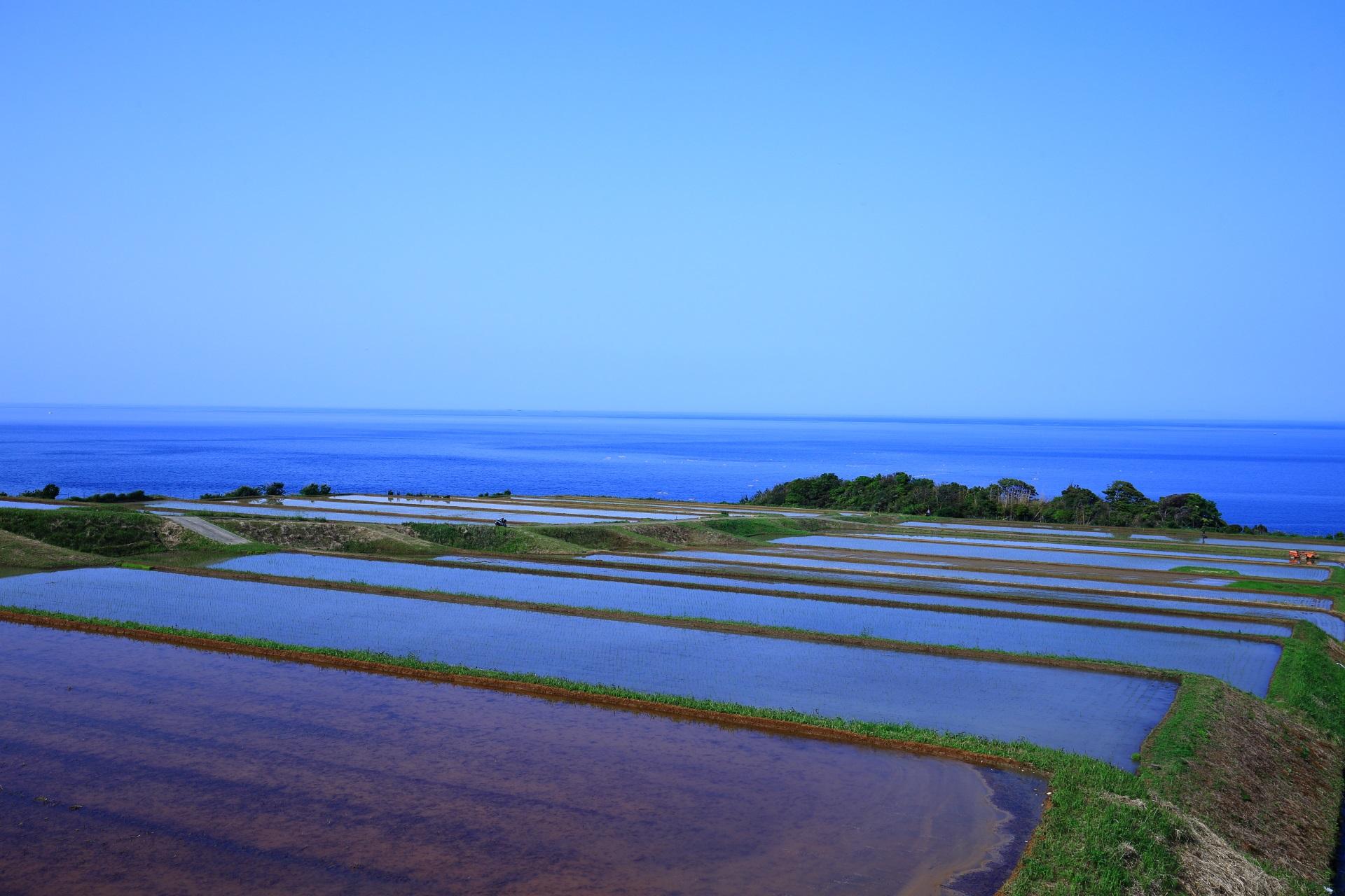 穏やかな青い海と青い空が引き立てる美しい棚田