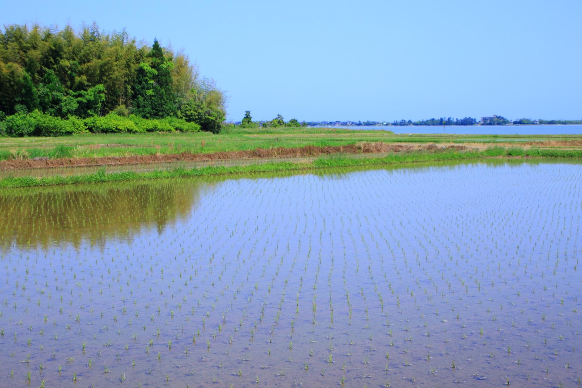 久美浜湾周辺に広がる長閑な田園風景
