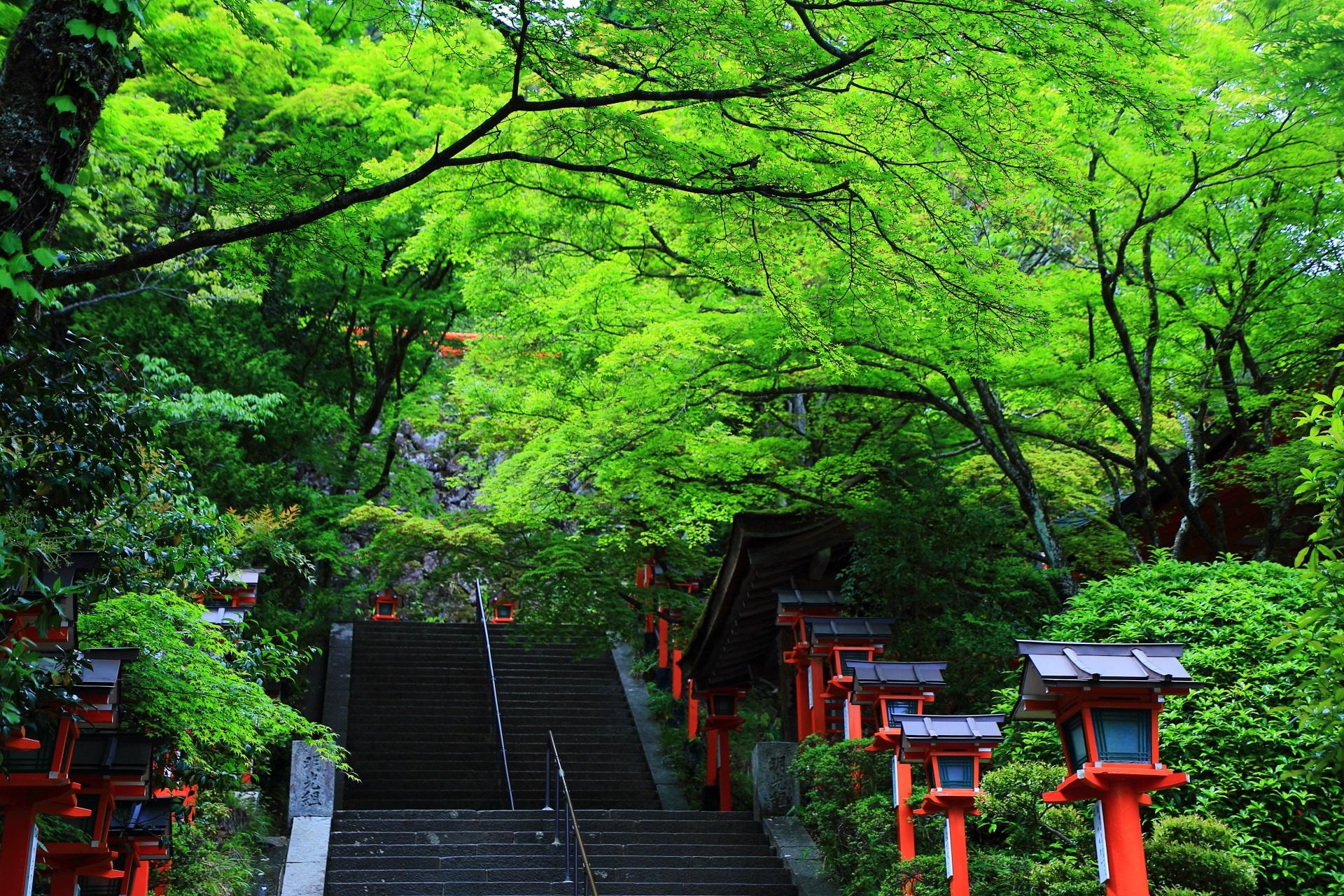 鞍馬寺 新緑 自然の中の深く鮮やかな春の彩り