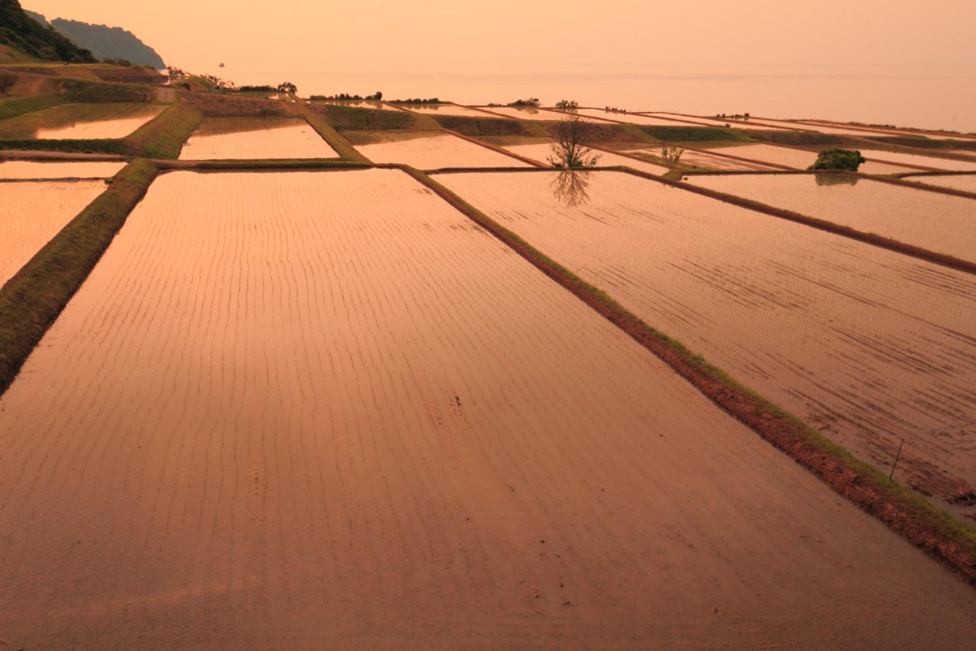 夕陽を浴びる新井の棚田