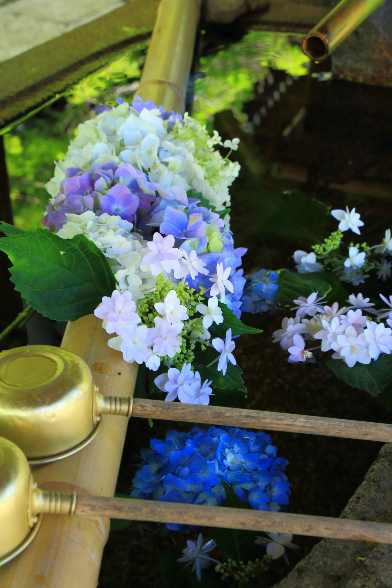生け花のように考えられて作られている真如堂のアジサイの手水舎