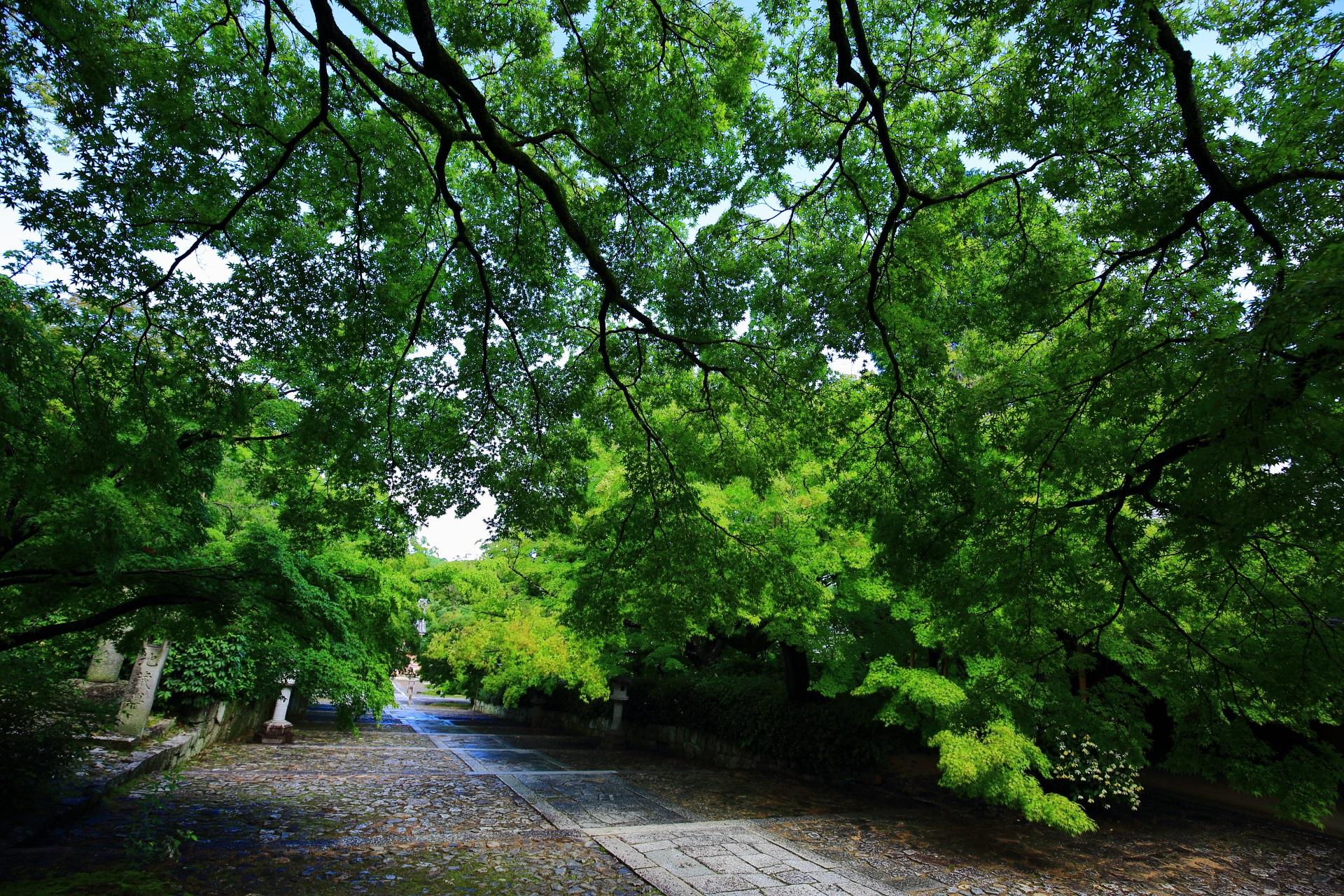 深い緑につつまれる初夏の真如堂