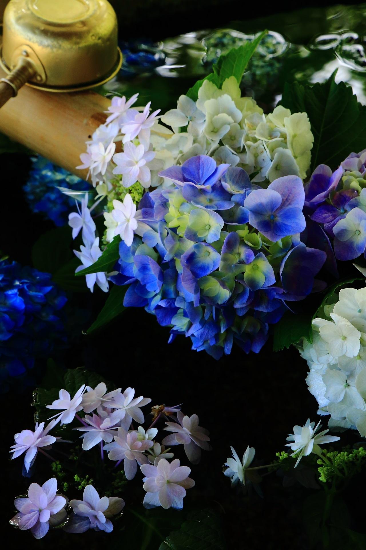 真如堂の手水舎の暗闇の中でほのかに灯るような紫陽花
