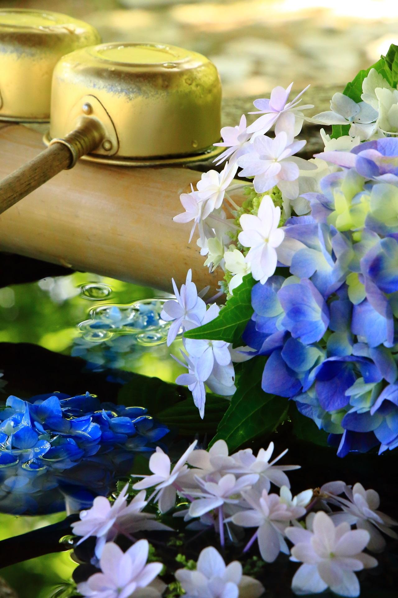 華やかな花と青もみじの淡い緑の水鏡が美しい絶品の紫陽花の手水舎