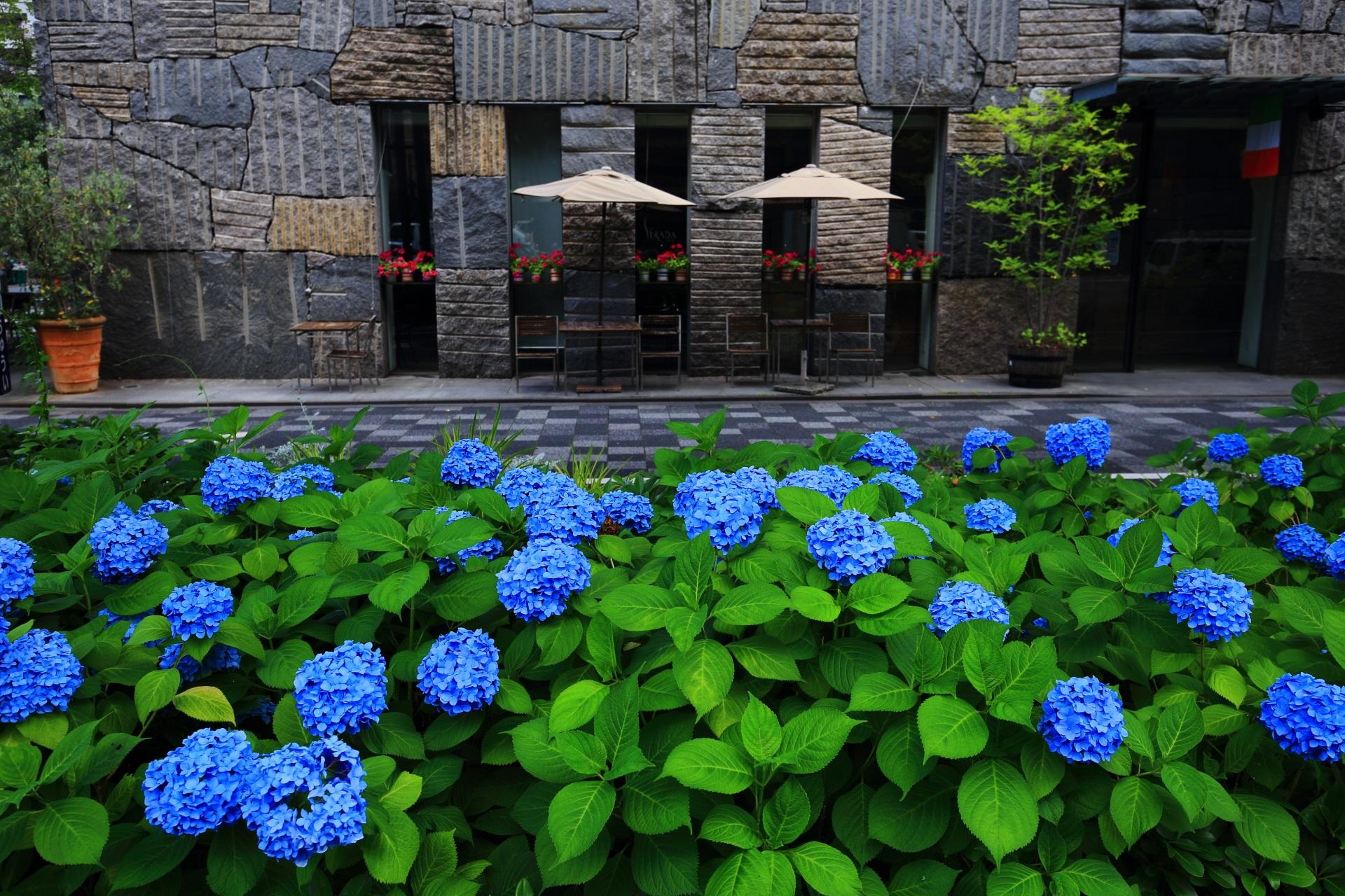イタリア料理店の「リストランテ・ストラーダ」前の紫陽花