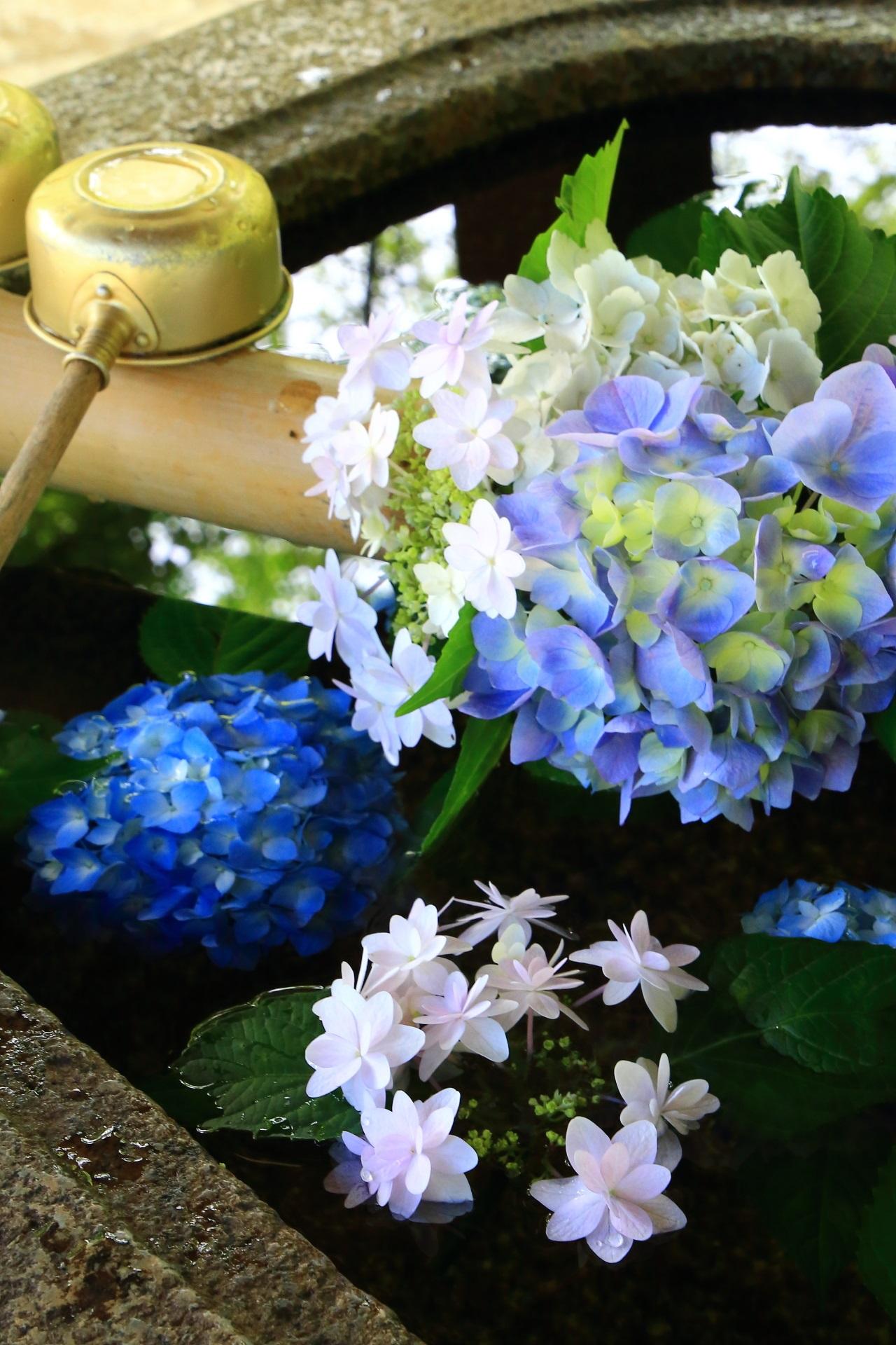 紫陽花の花とともに水鏡も楽しめるアジサイの手水舎