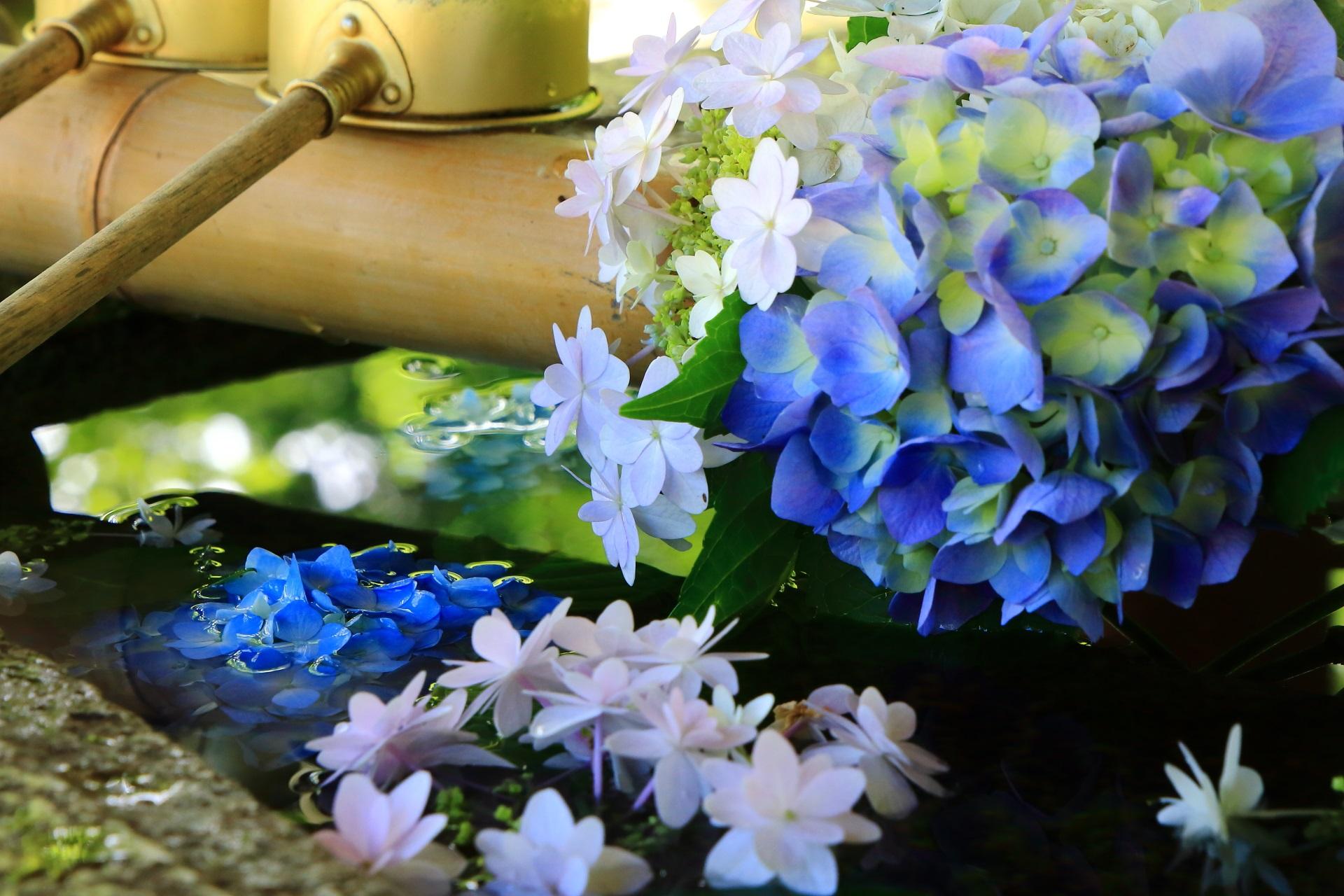 絶品の紫陽花の手水舎と鮮やかな彩り