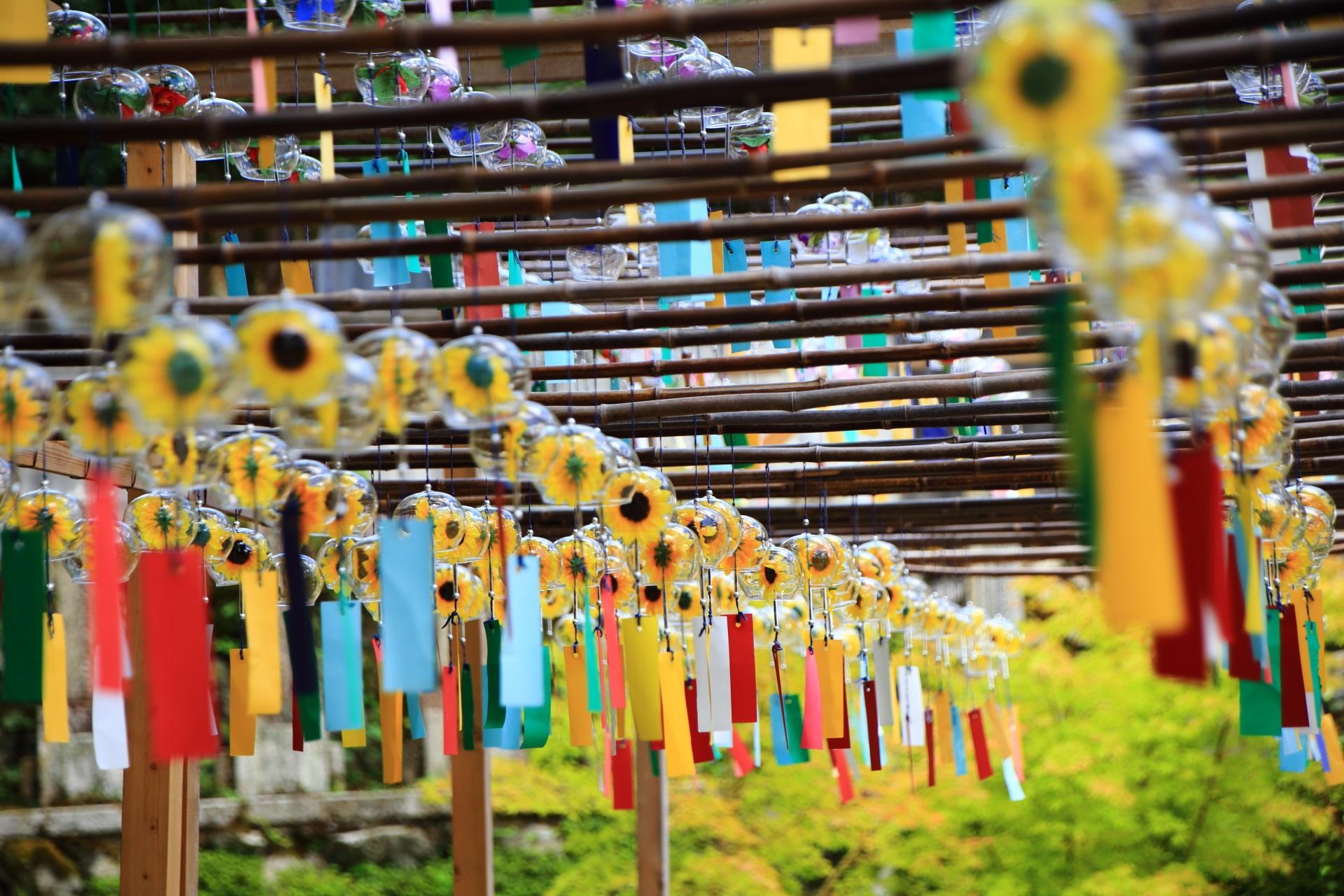正寿院の夏らしいひまわりの風鈴
