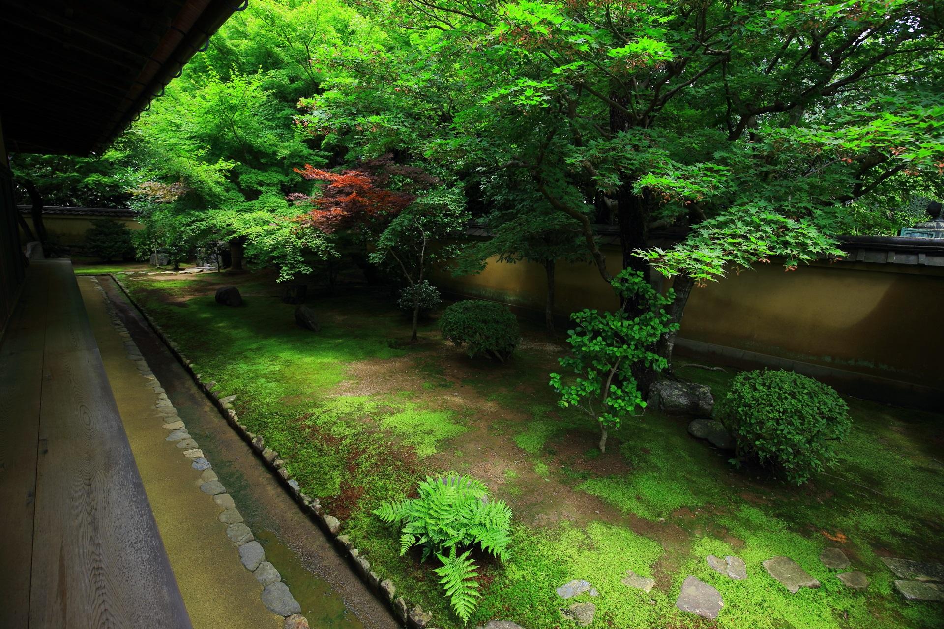 興臨院の素晴らしい庭園と情景