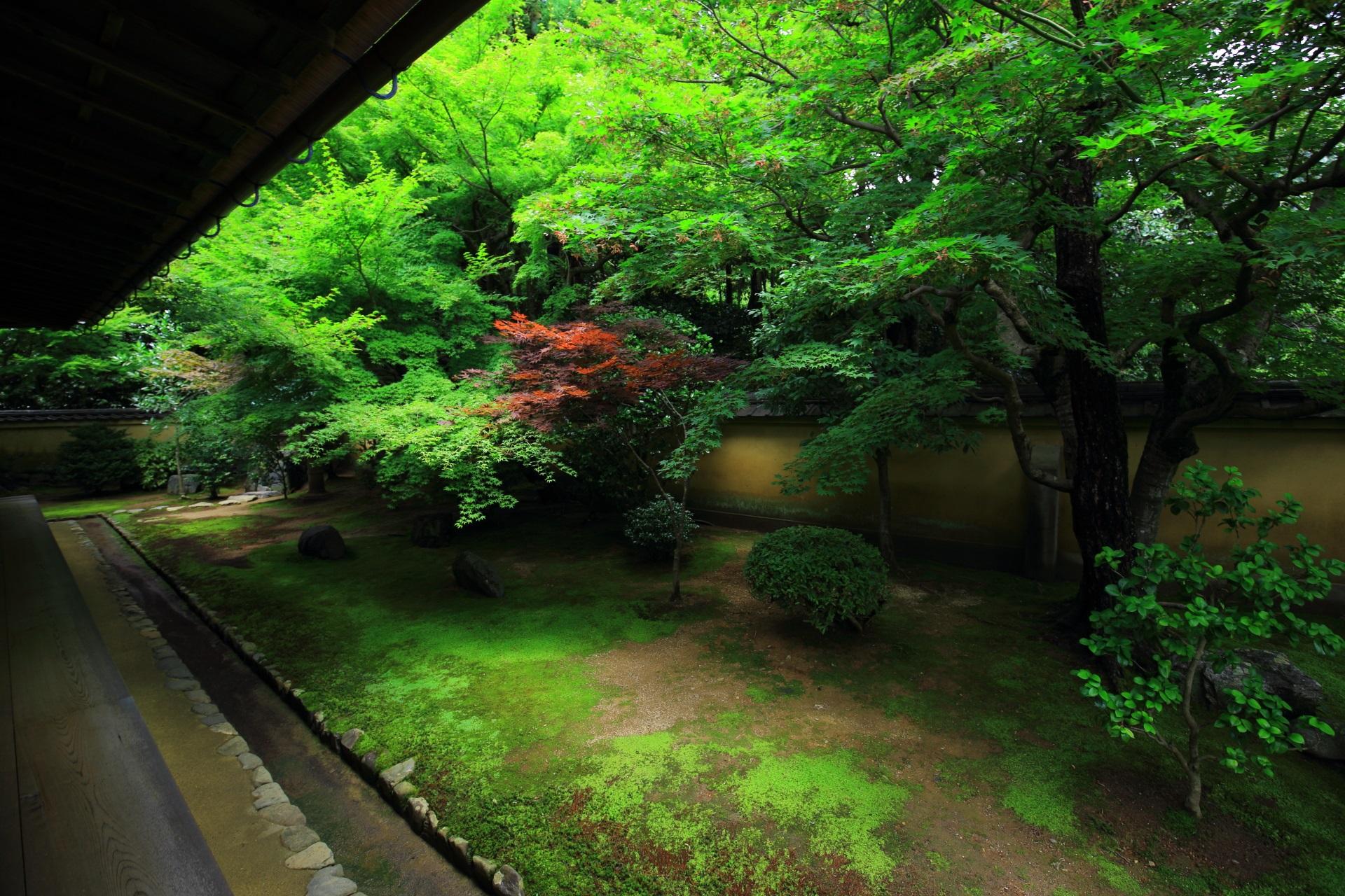 興臨院のもみじ溢れる方丈裏庭園