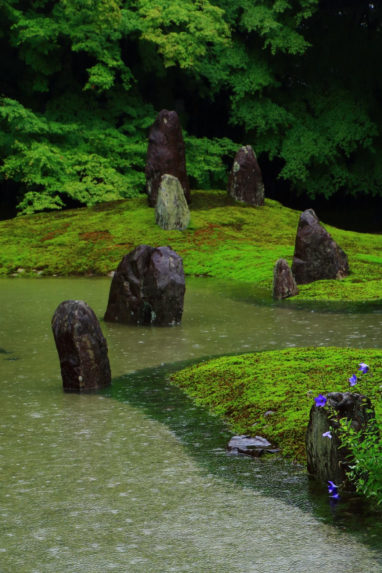 池と緑の波心庭で紫の鮮やかなアクセントになる桔梗