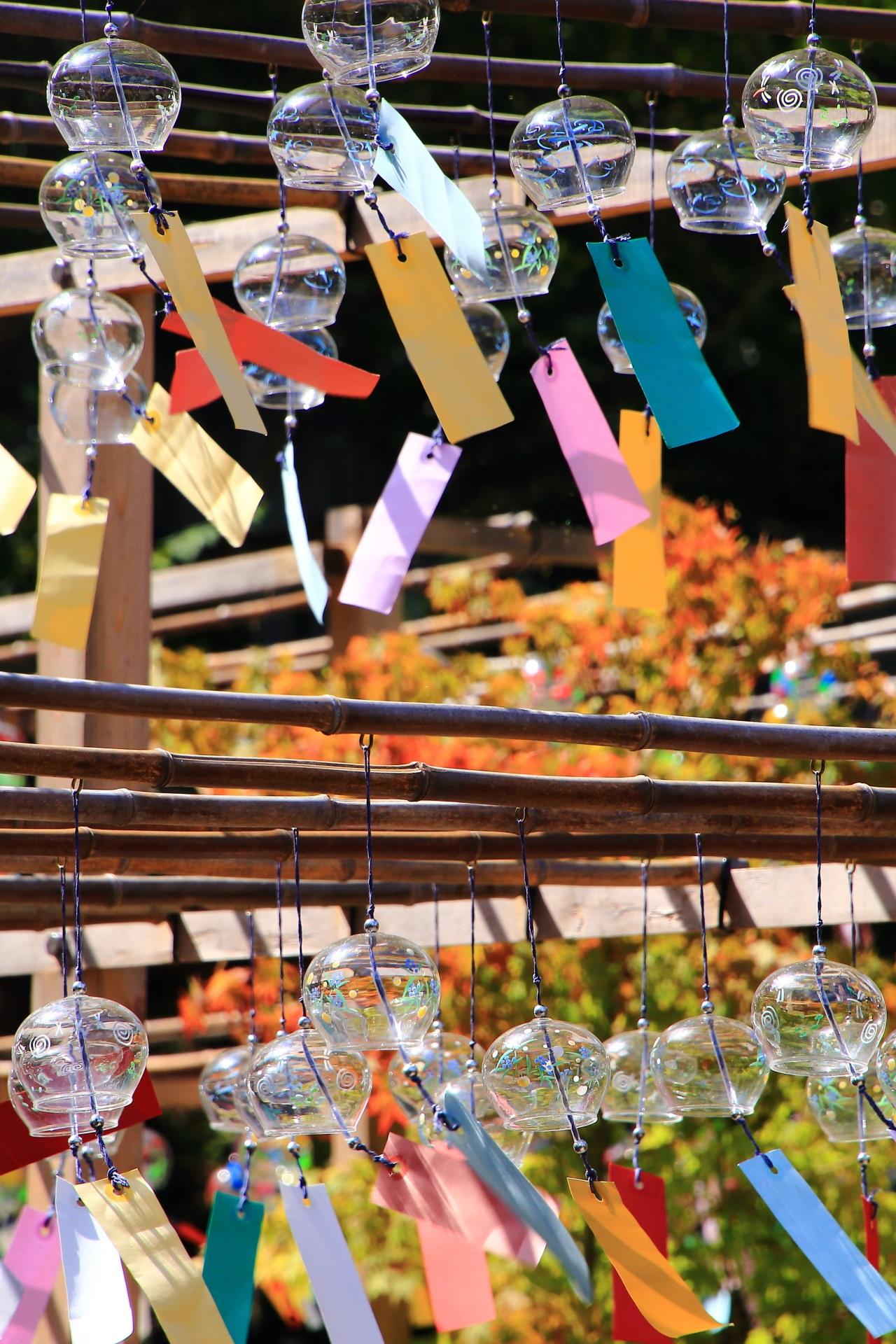 鮮やかな青もみじを背景に輝く正寿院の賑やかな風鈴