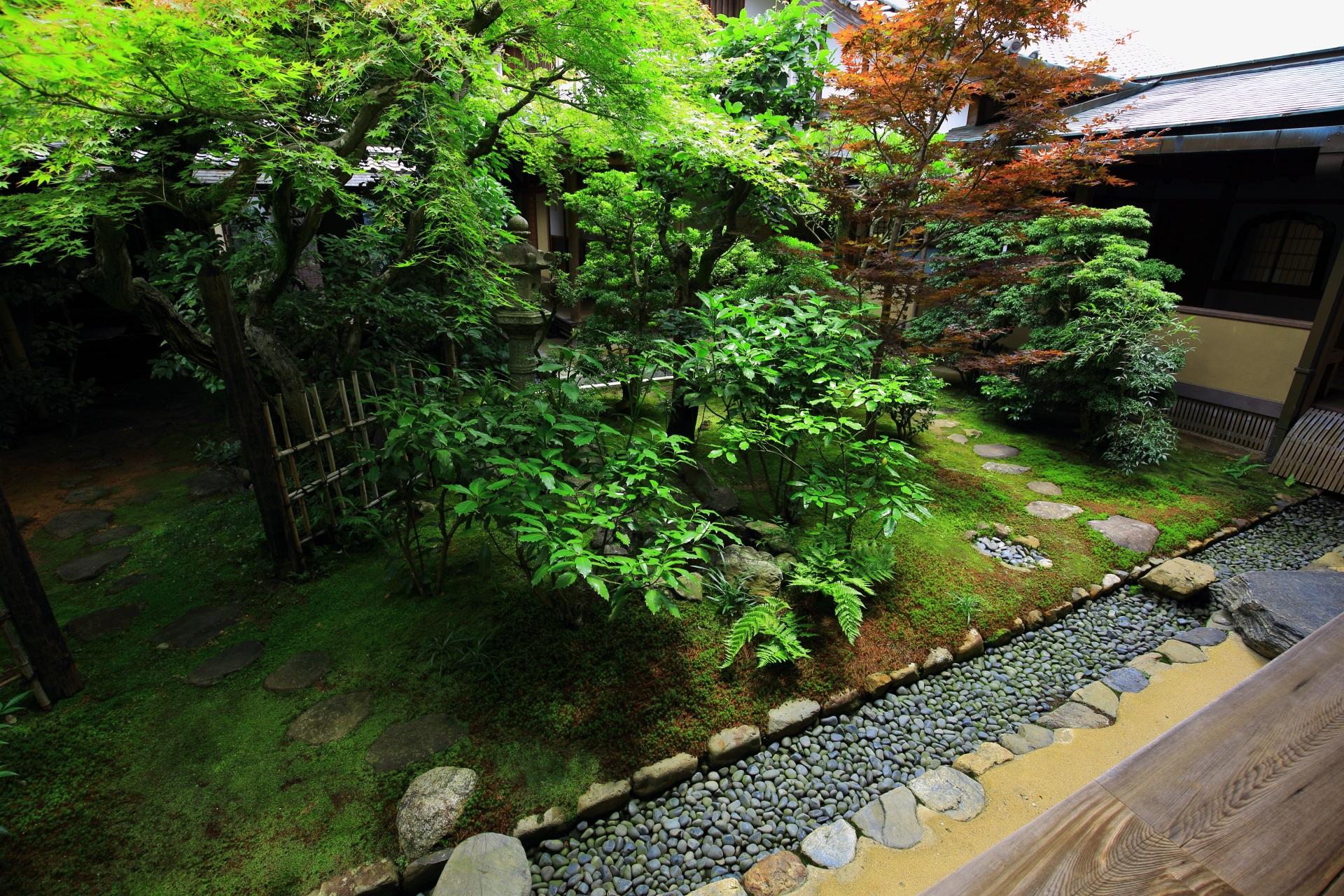 多種多様な植物や緑につつまれる興臨院の露地庭
