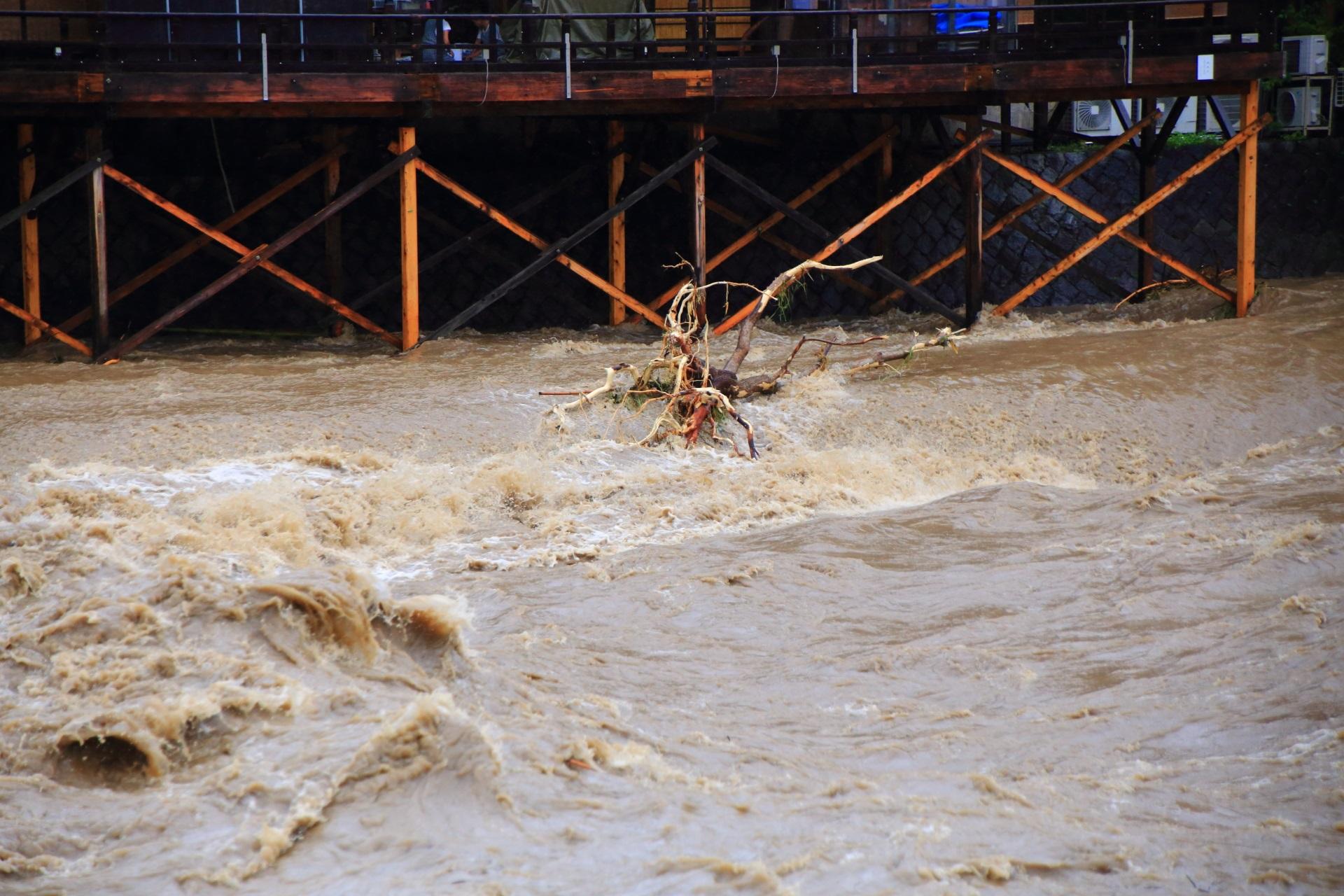 鴨側河川敷に引っかかる流されてきた大きな木