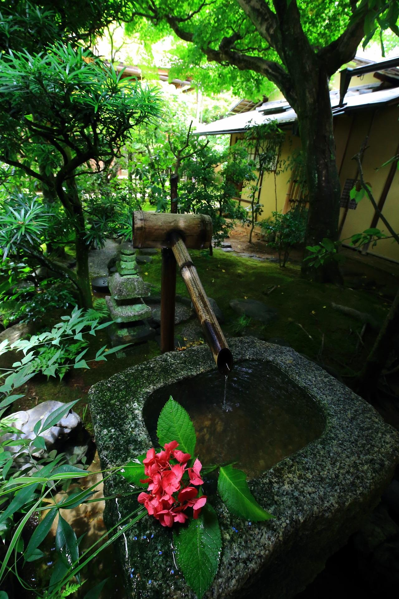 興臨院の落ち着いた色合いの中庭の手水鉢にそえられる鮮やかな紫陽花