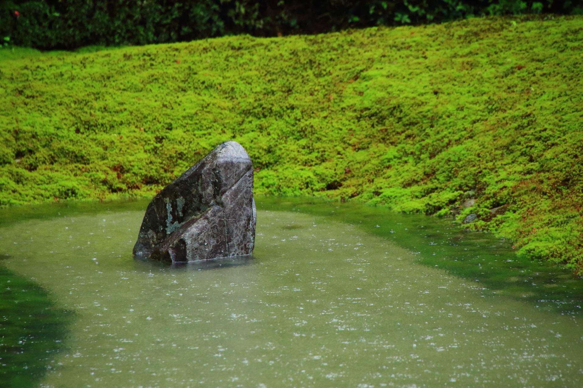 波心庭の淡い苔につつまれた水に浮かぶ岩