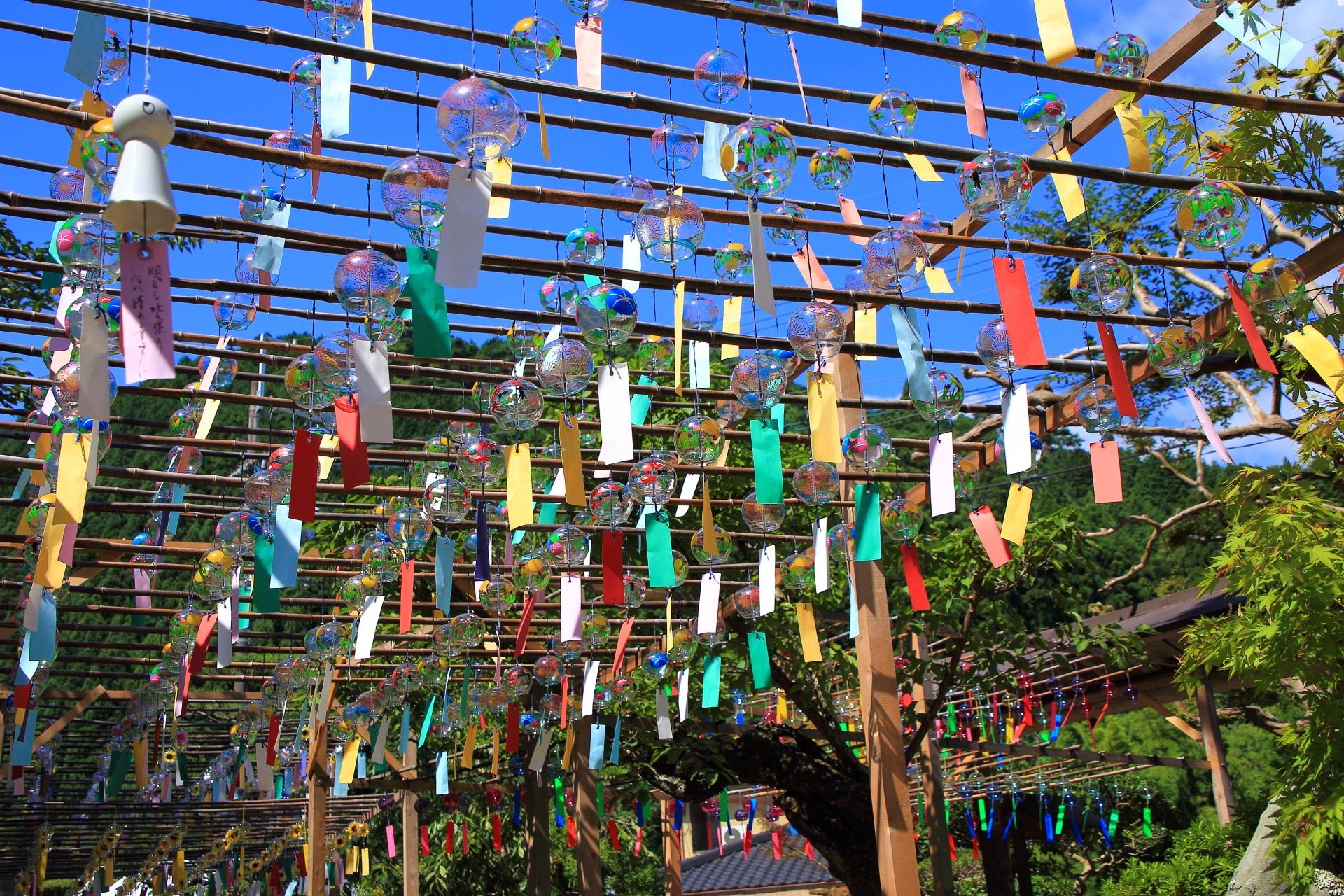 風にそよぐ正寿院の圧巻の風鈴まつり