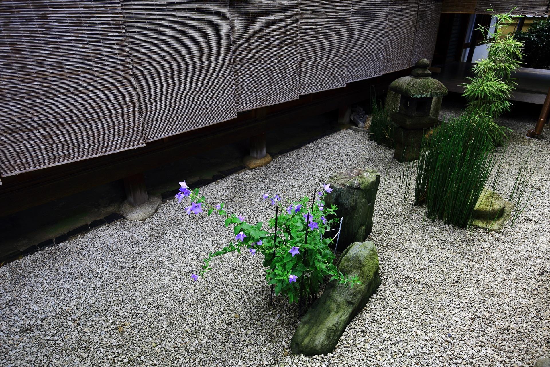 桔梗の花咲く瑞峯院の東の坪庭