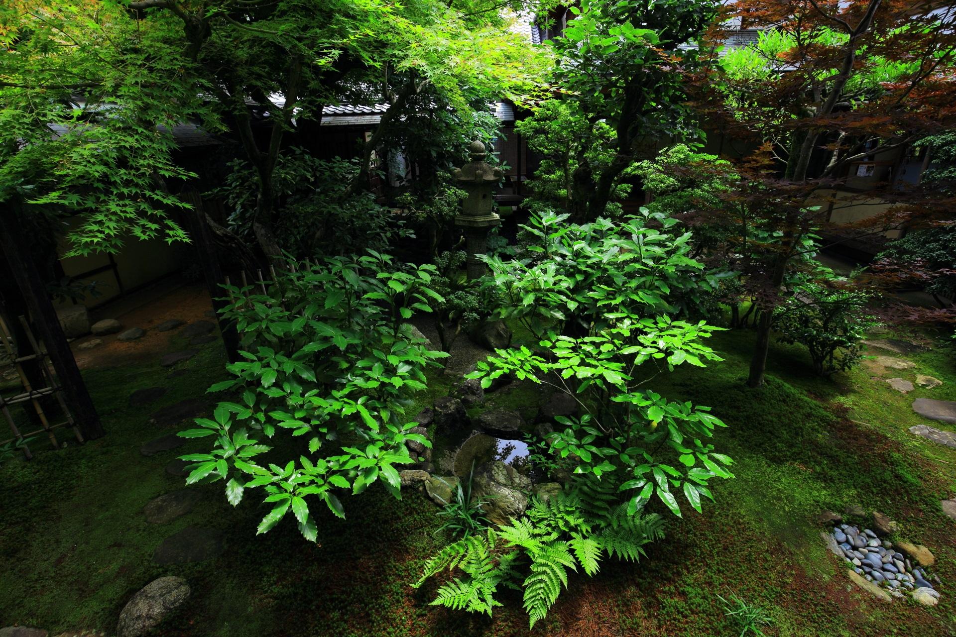 鮮やかで多彩な緑が溢れている興臨院の中庭