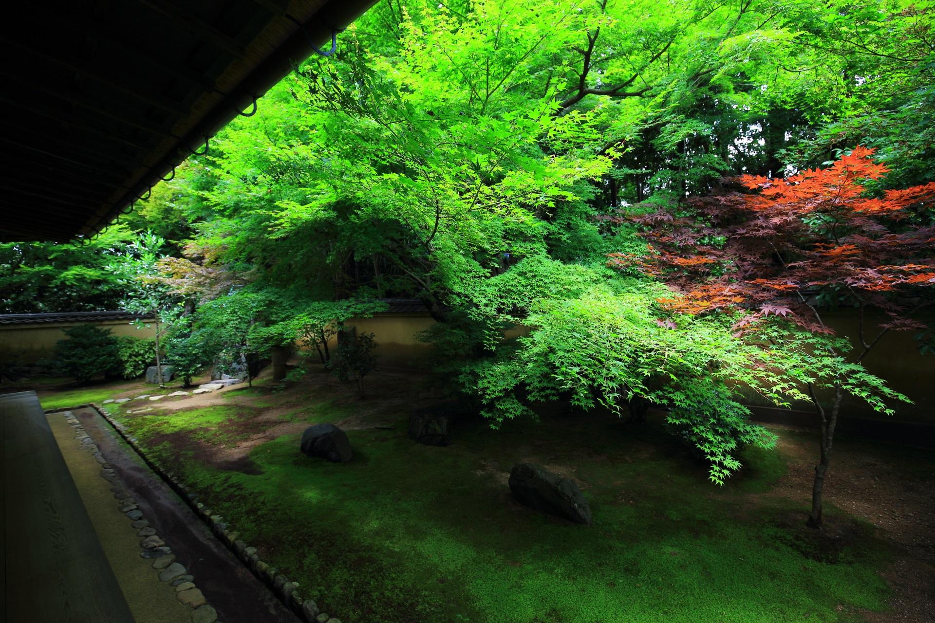 青もみじや苔などの見事な緑の空間が広がる興臨院の方丈裏庭園