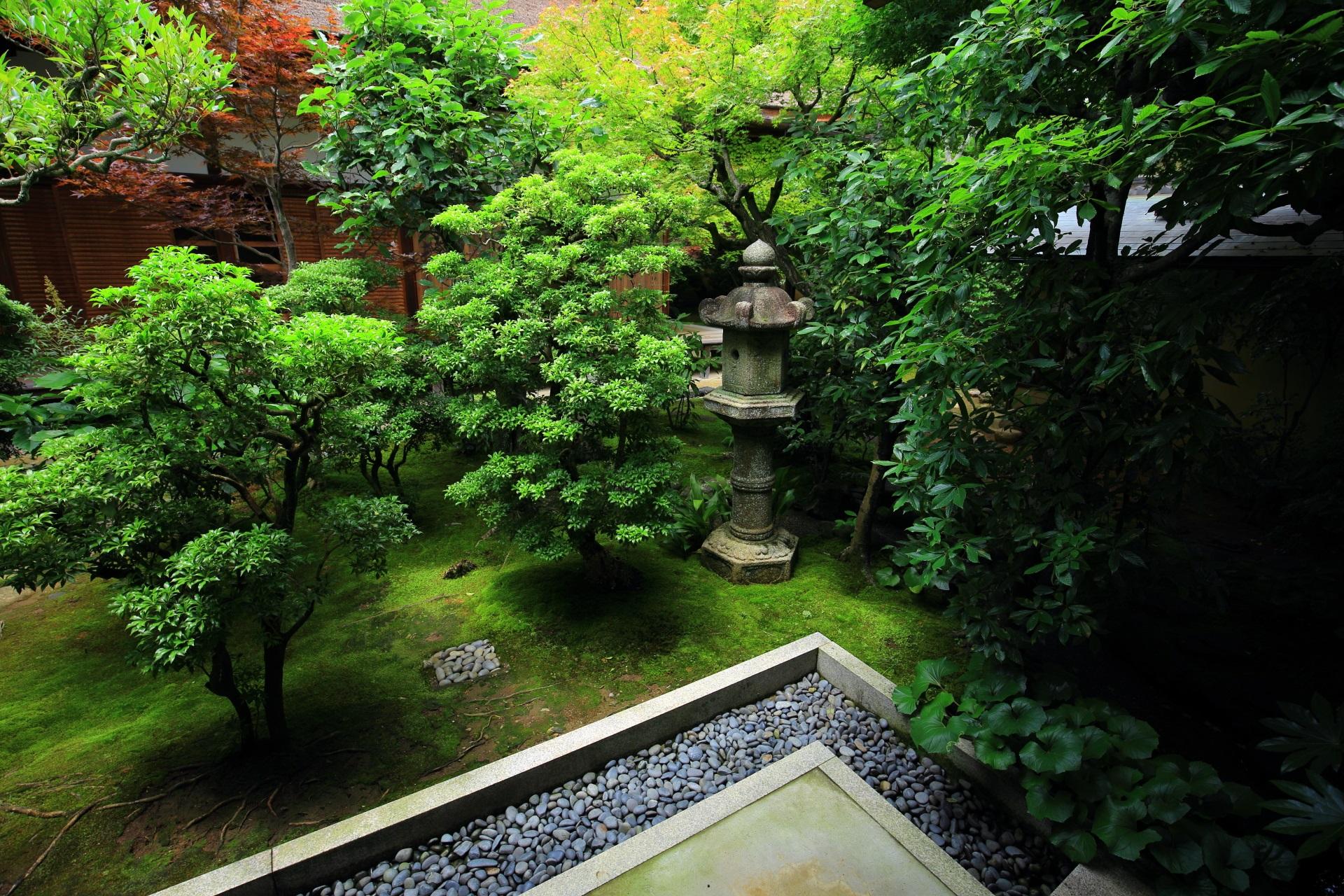 いろんな種類の木々や植物が彩る興臨院の趣きある中庭