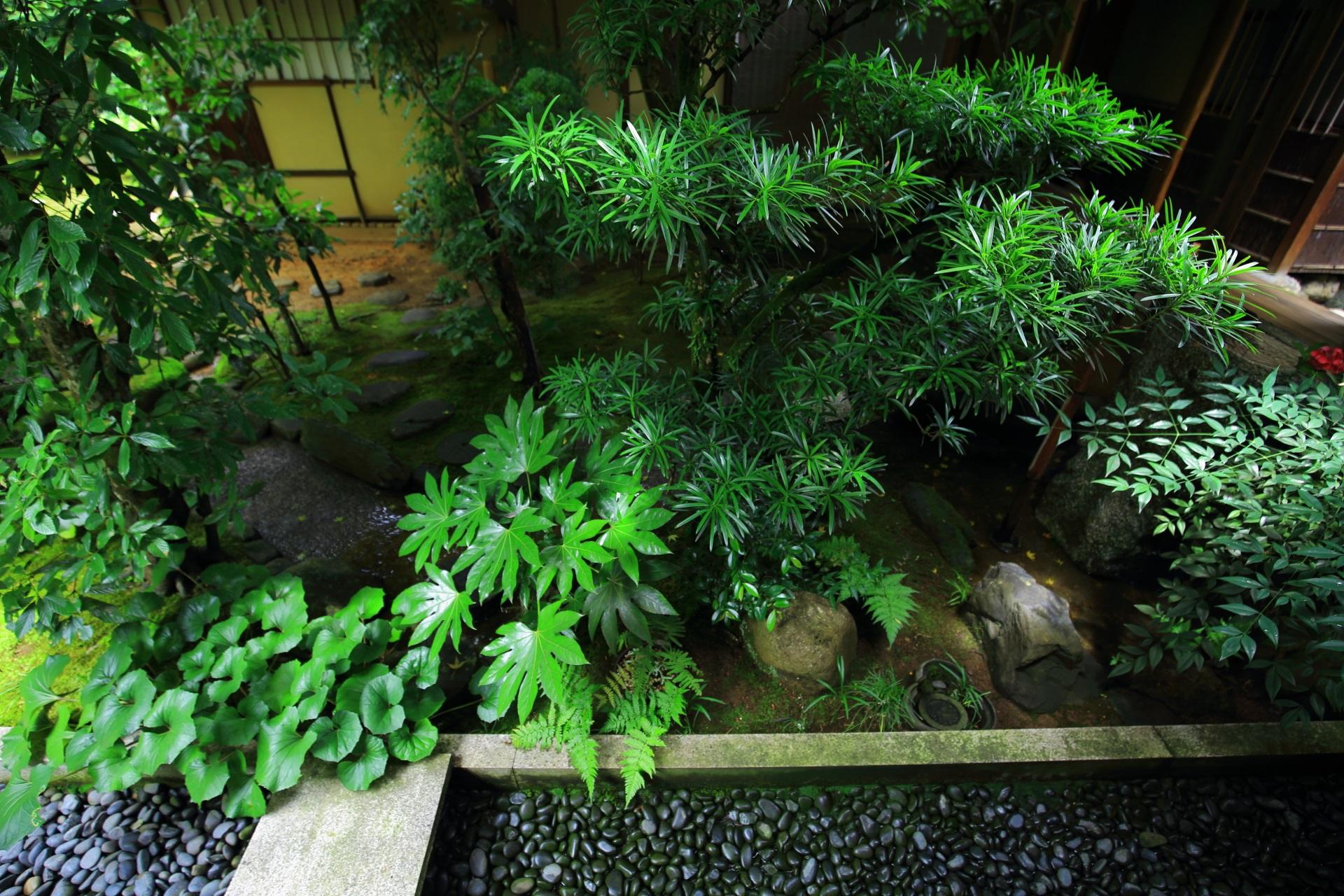 雨で潤ったたくさんの緑が生き生きとする興臨院の中庭
