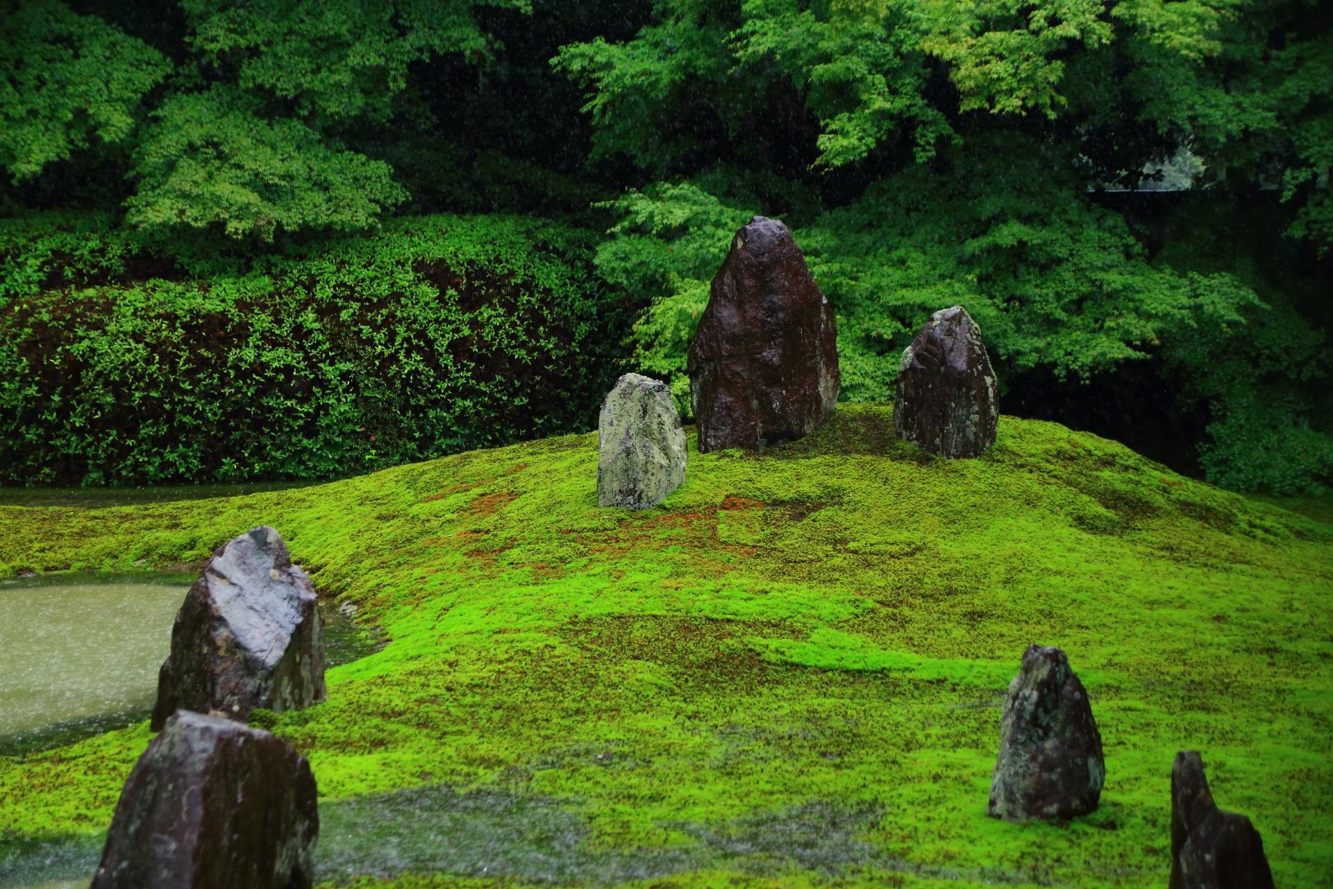 雨で潤う苔と岩の築山と背後の青もみじ