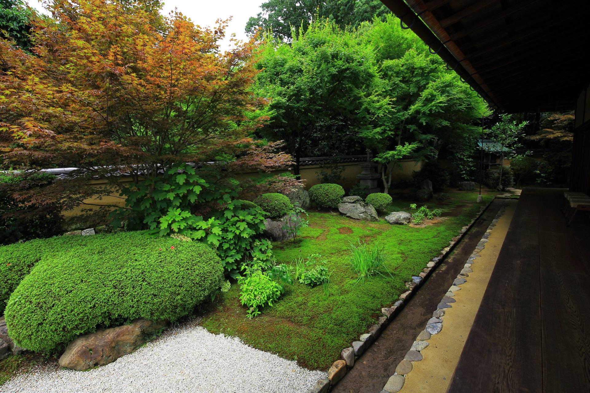 貝多羅樹(ばいたらじゅ)が植えられる興臨院の方丈西庭
