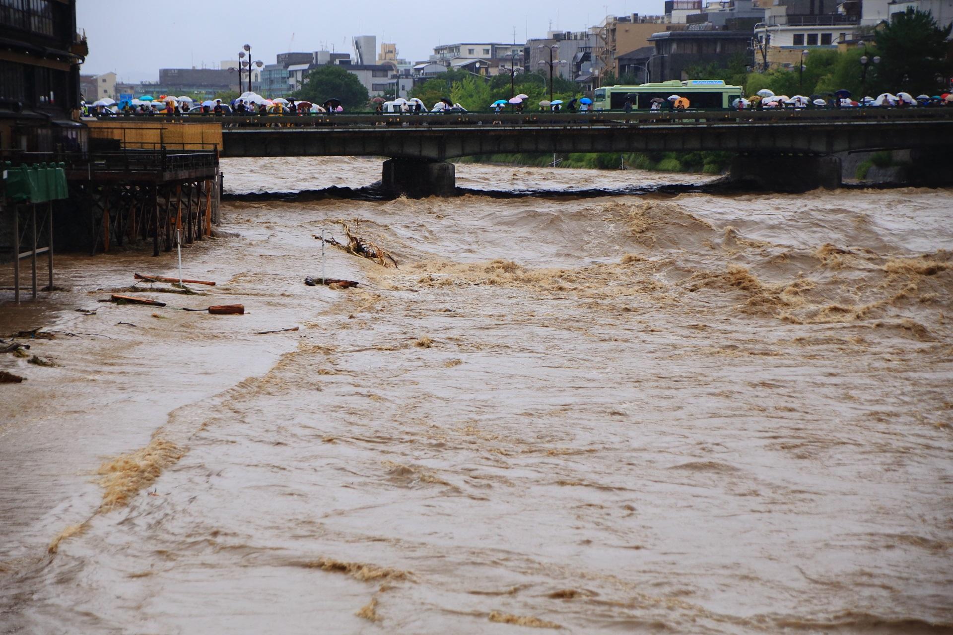 鴨川の激流によって流され漂着したたくさんの丸太