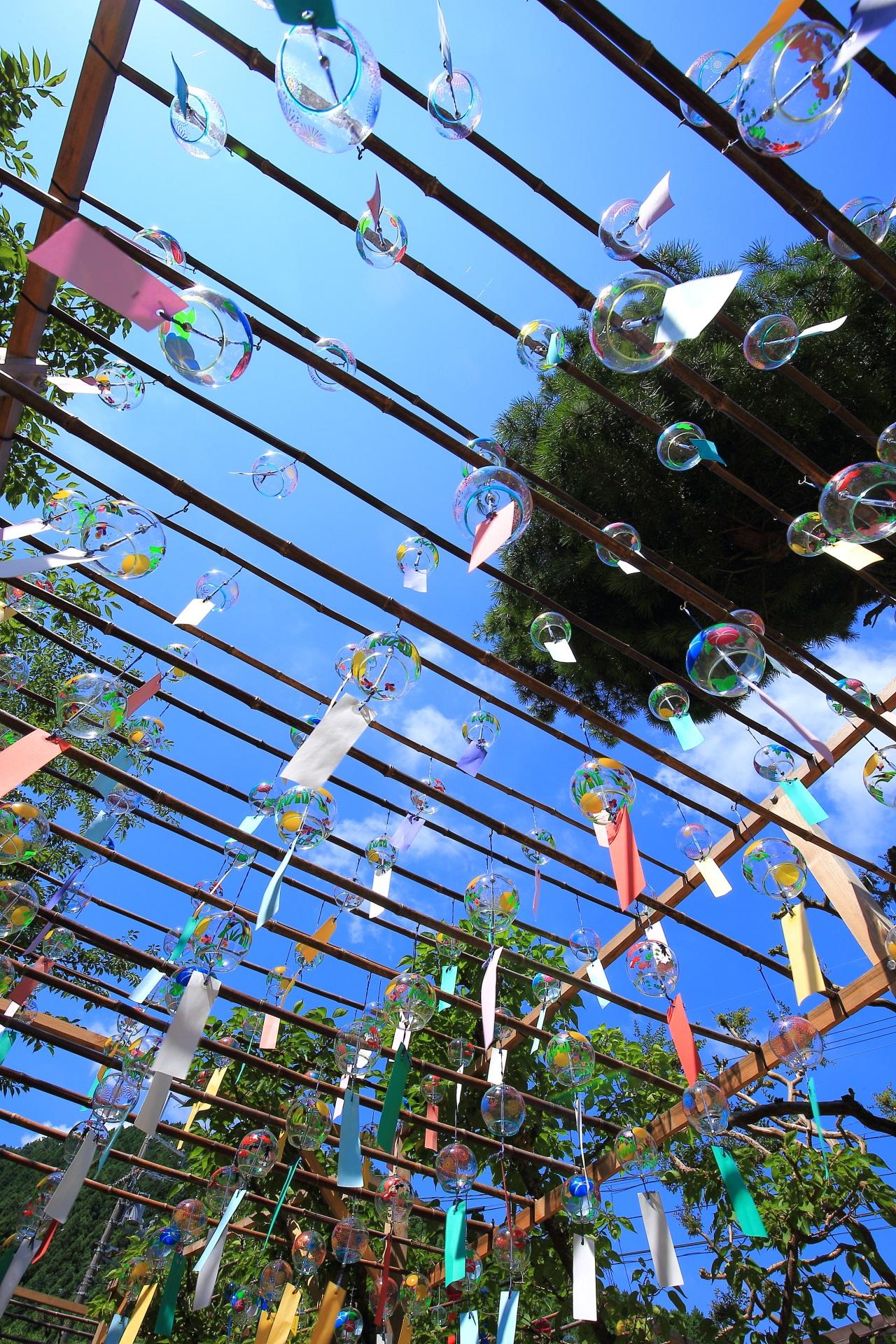 青空から降り注ぐ正寿院の楽しげで美しい風鈴