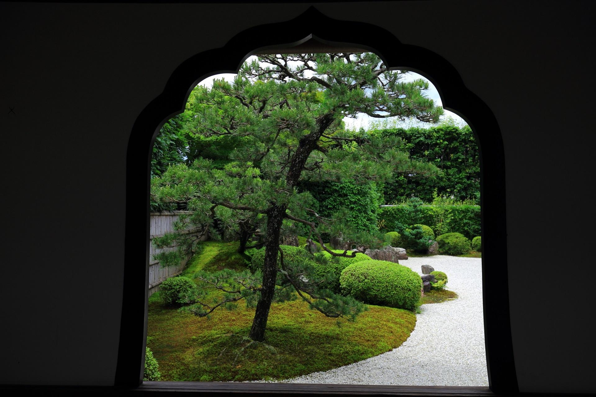 興臨院の唐門の花頭窓から眺めた松の木や刈り込みが綺麗に収まる方丈前庭園
