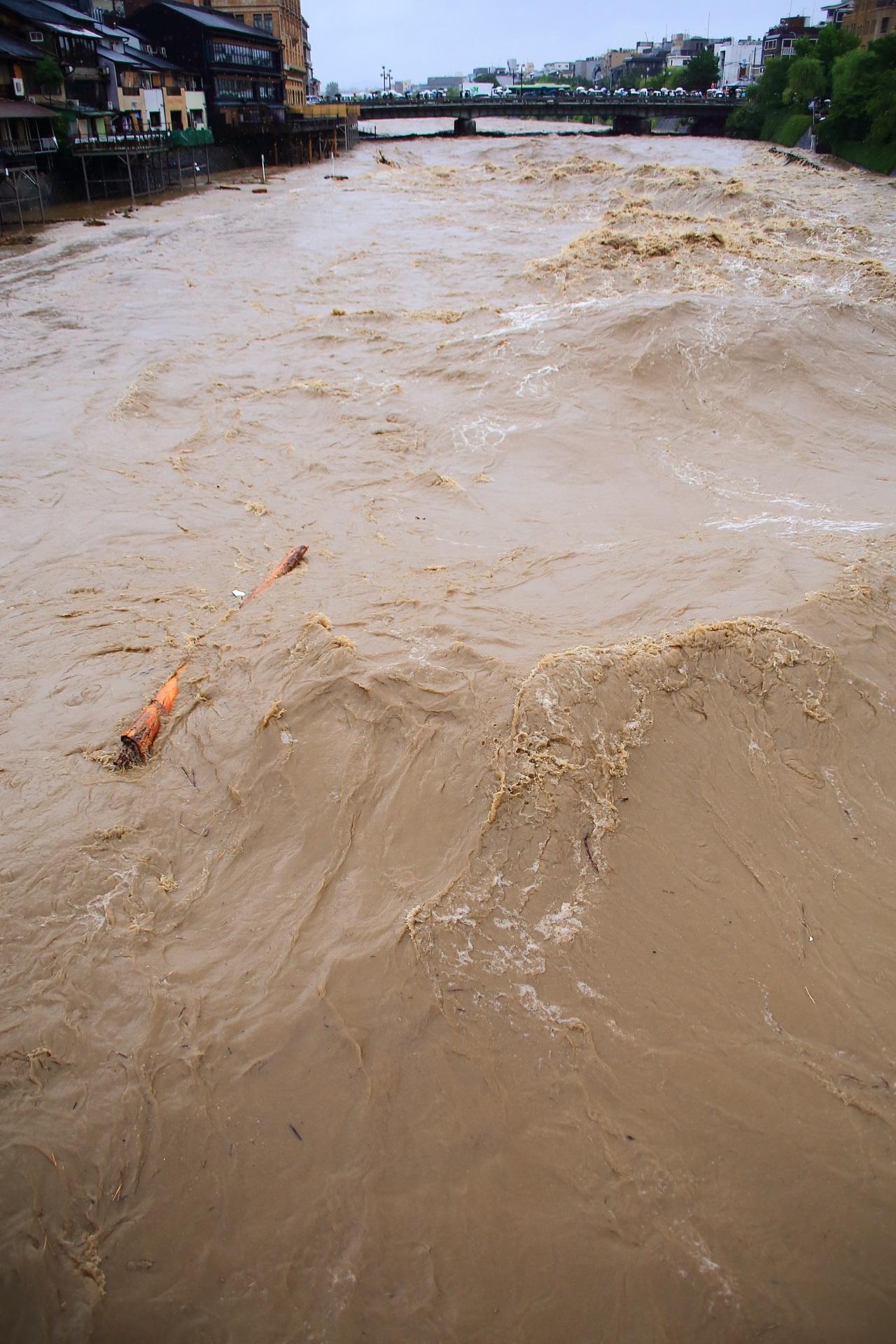 鴨川の大量の水で流される大きな丸太