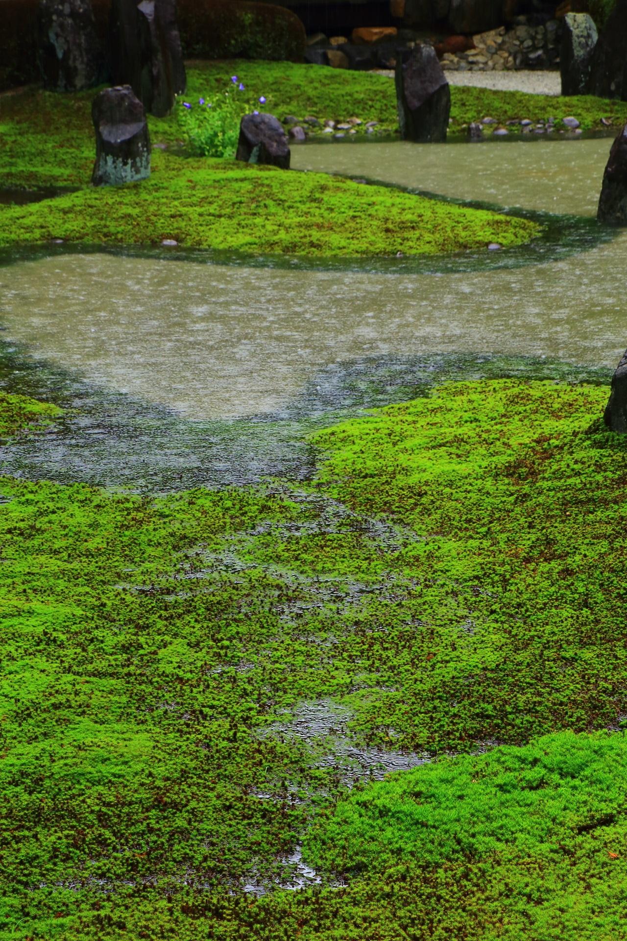 東福寺塔頭の光明院の大雨にできる池と苔を流れる小川