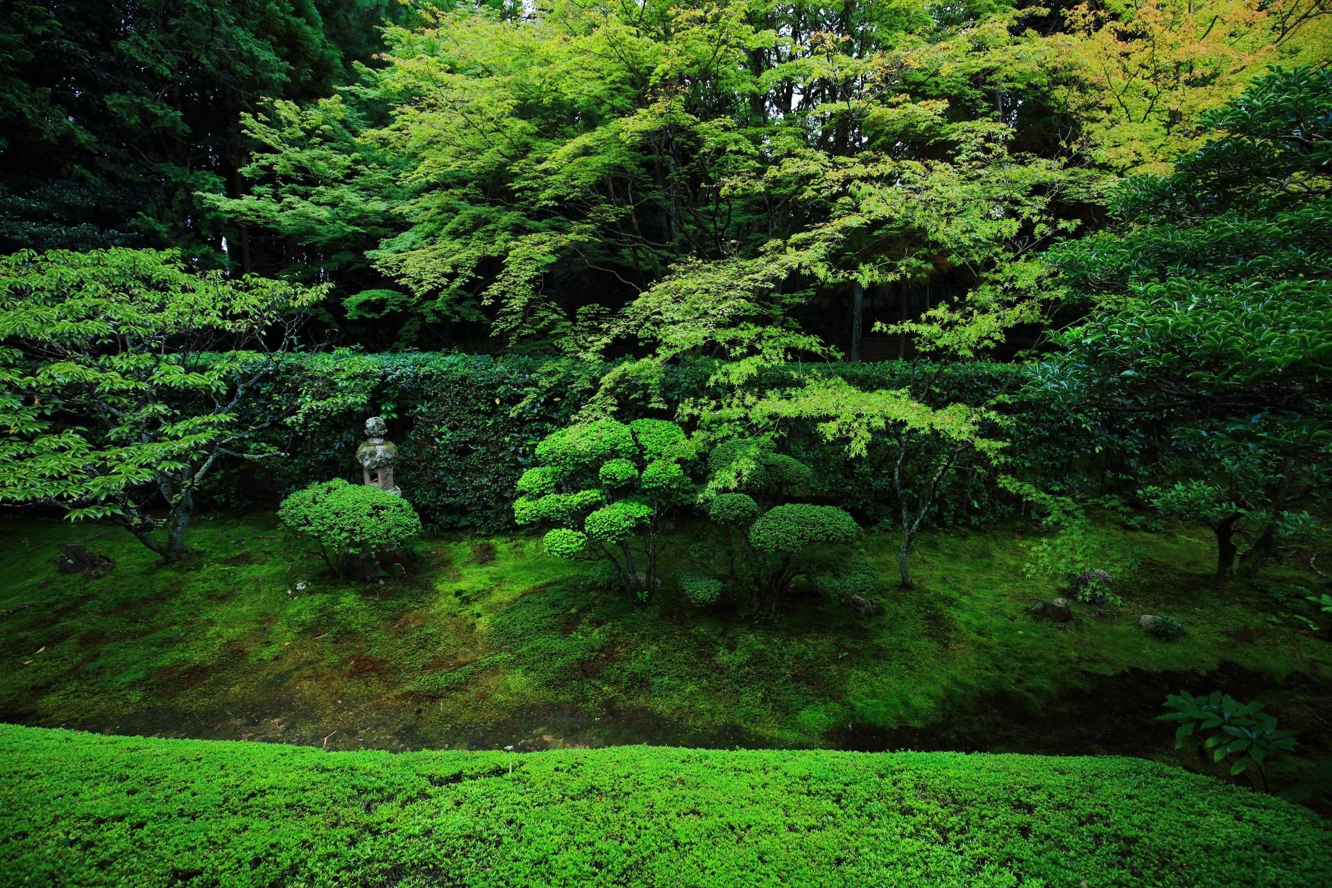 多種多様な木々が植えられる桂春院の庭園