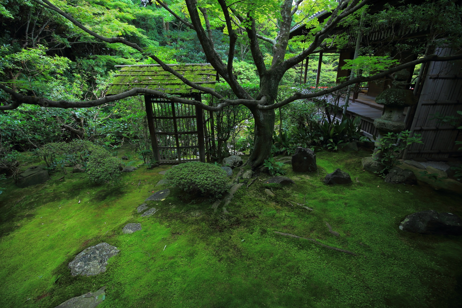 桂春院の侘の庭と方丈