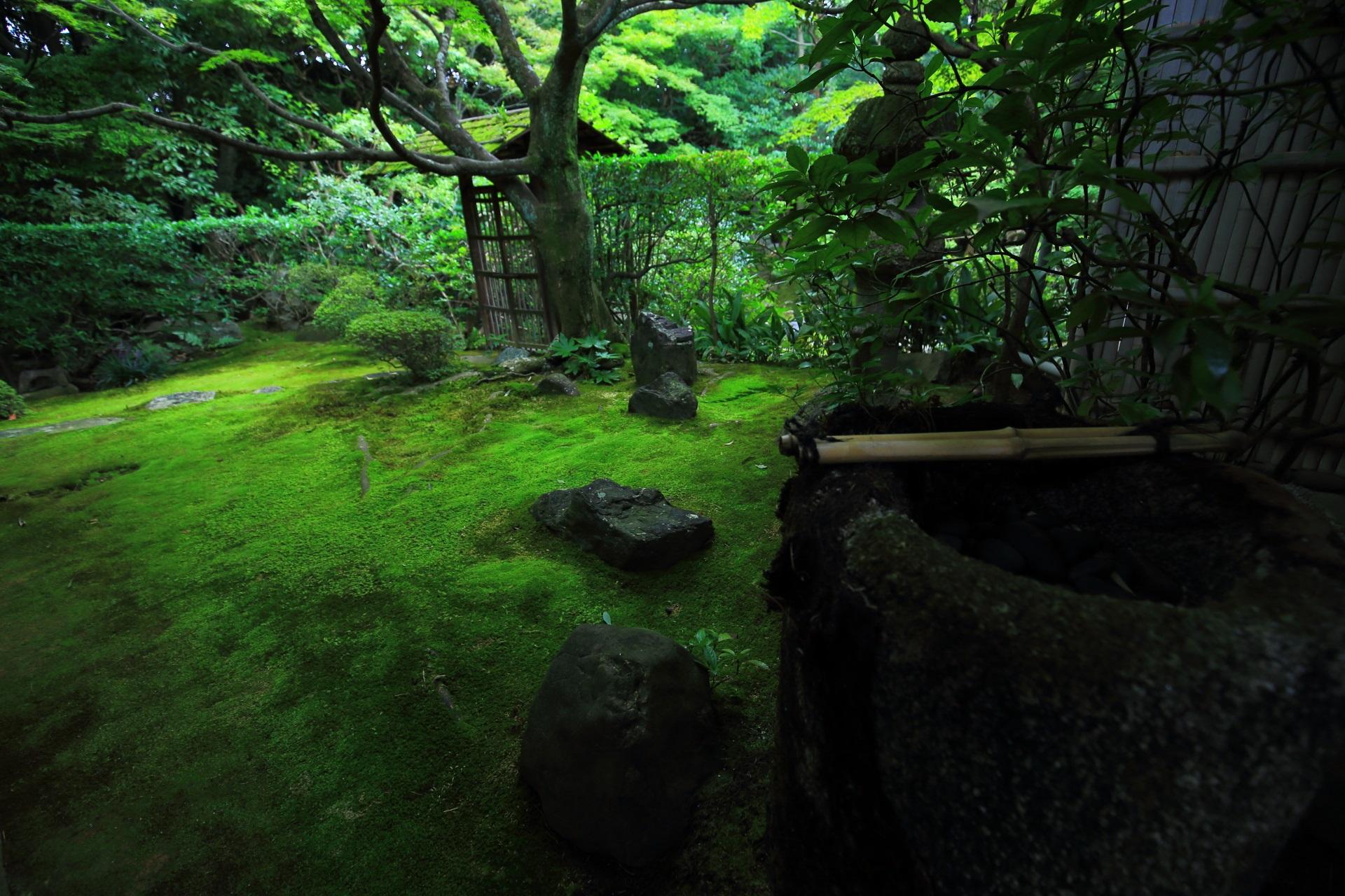 手水鉢と侘の庭