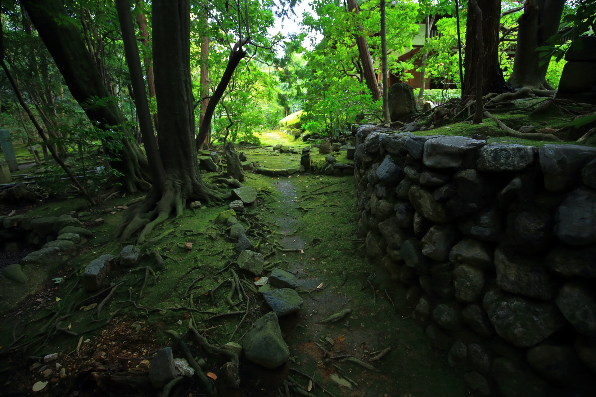 桂春院の奥の参道とツツジの刈り込み