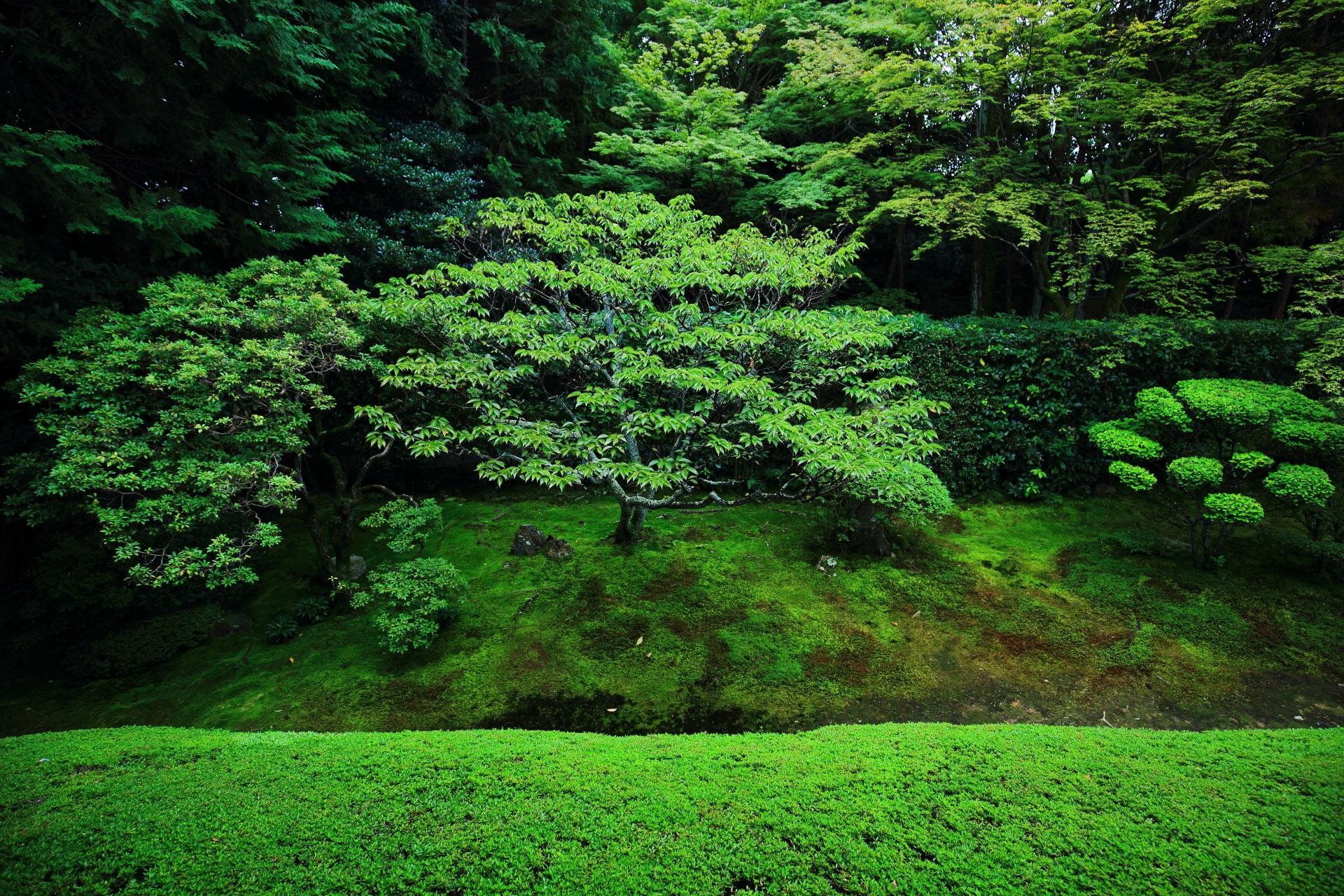 見事な緑の広がる桂春院の真如の庭