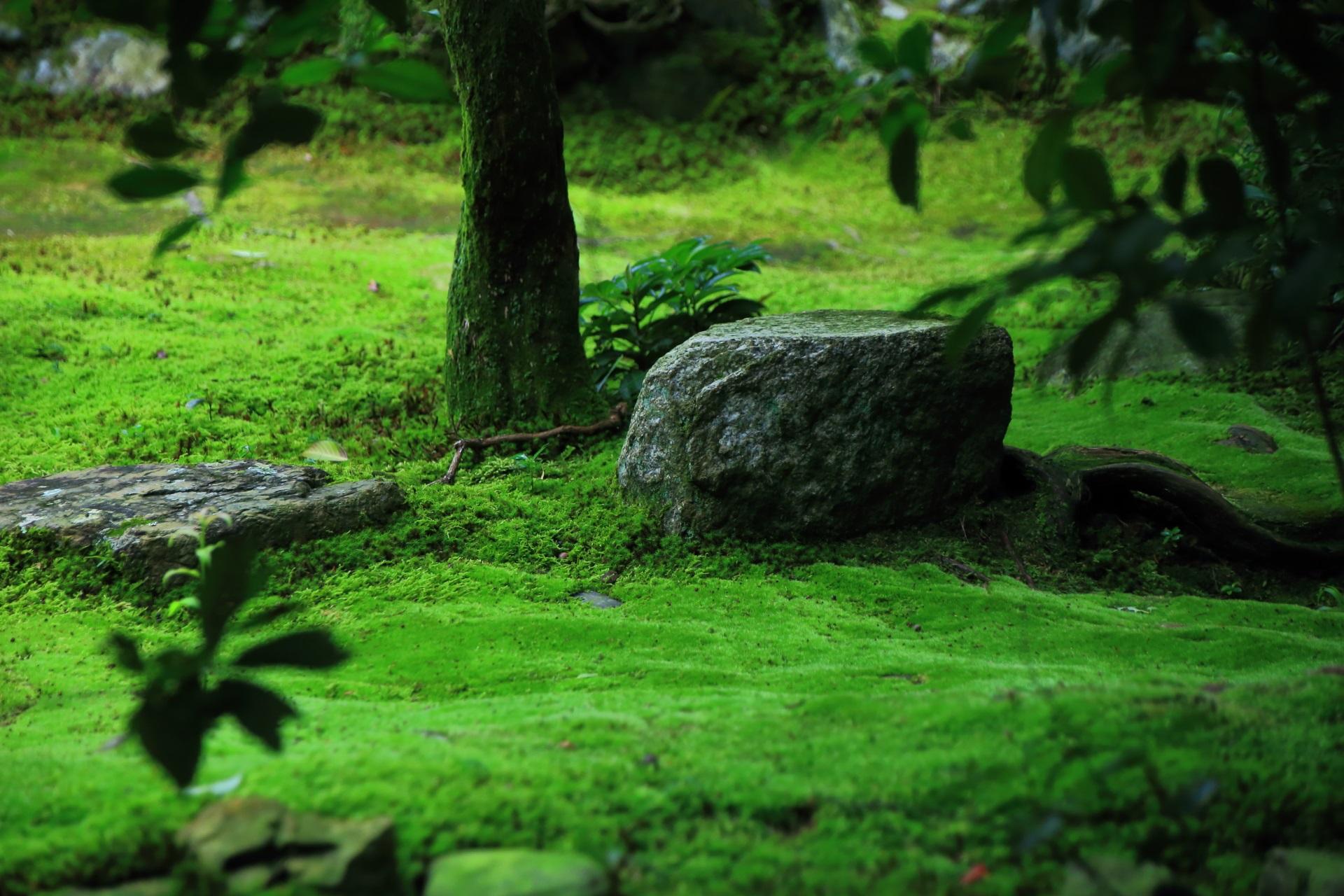 妙心寺塔頭の桂春院の風情ある庭園