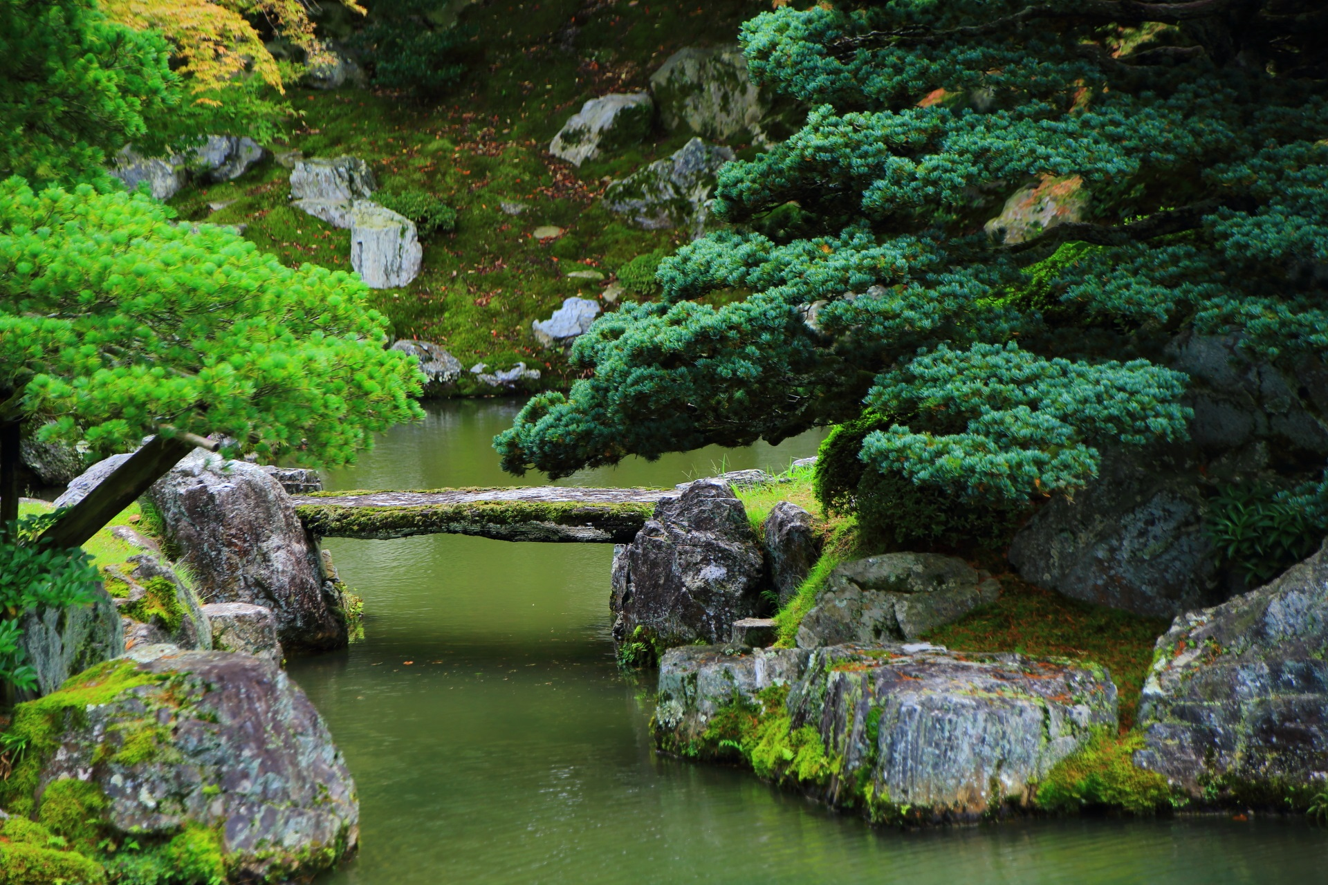 鶴島の五葉松と鶴の首とされる石橋