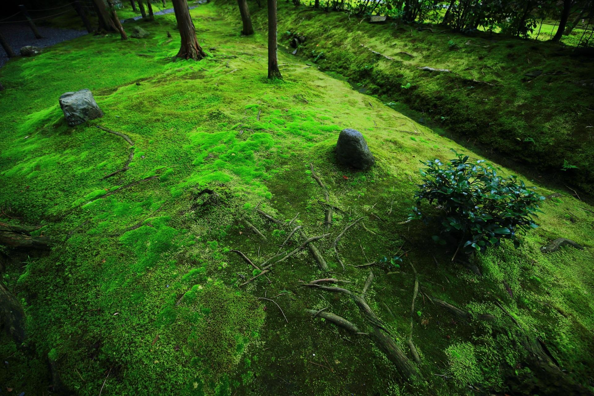 桂春院の極上の苔と石