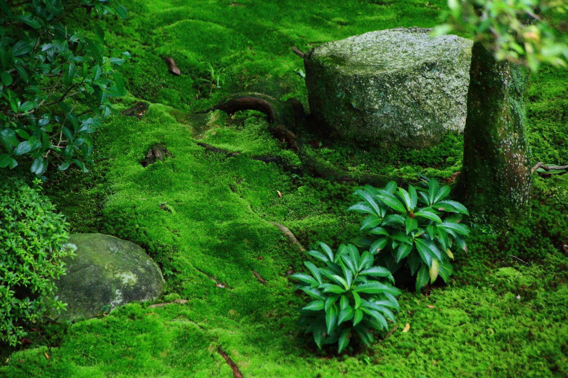 苔や緑の美しい桂春院の庭園