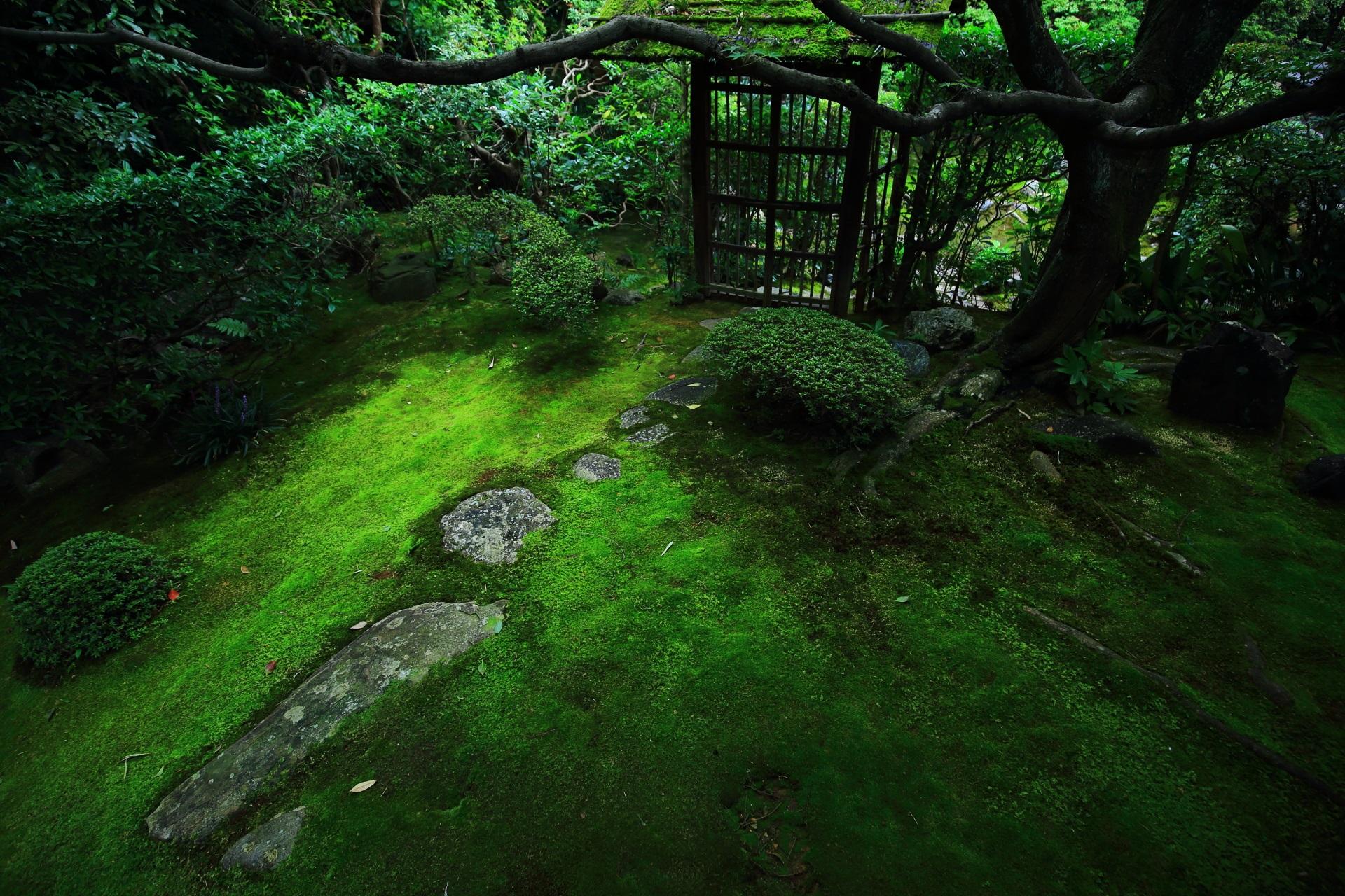 梅軒門と侘の庭