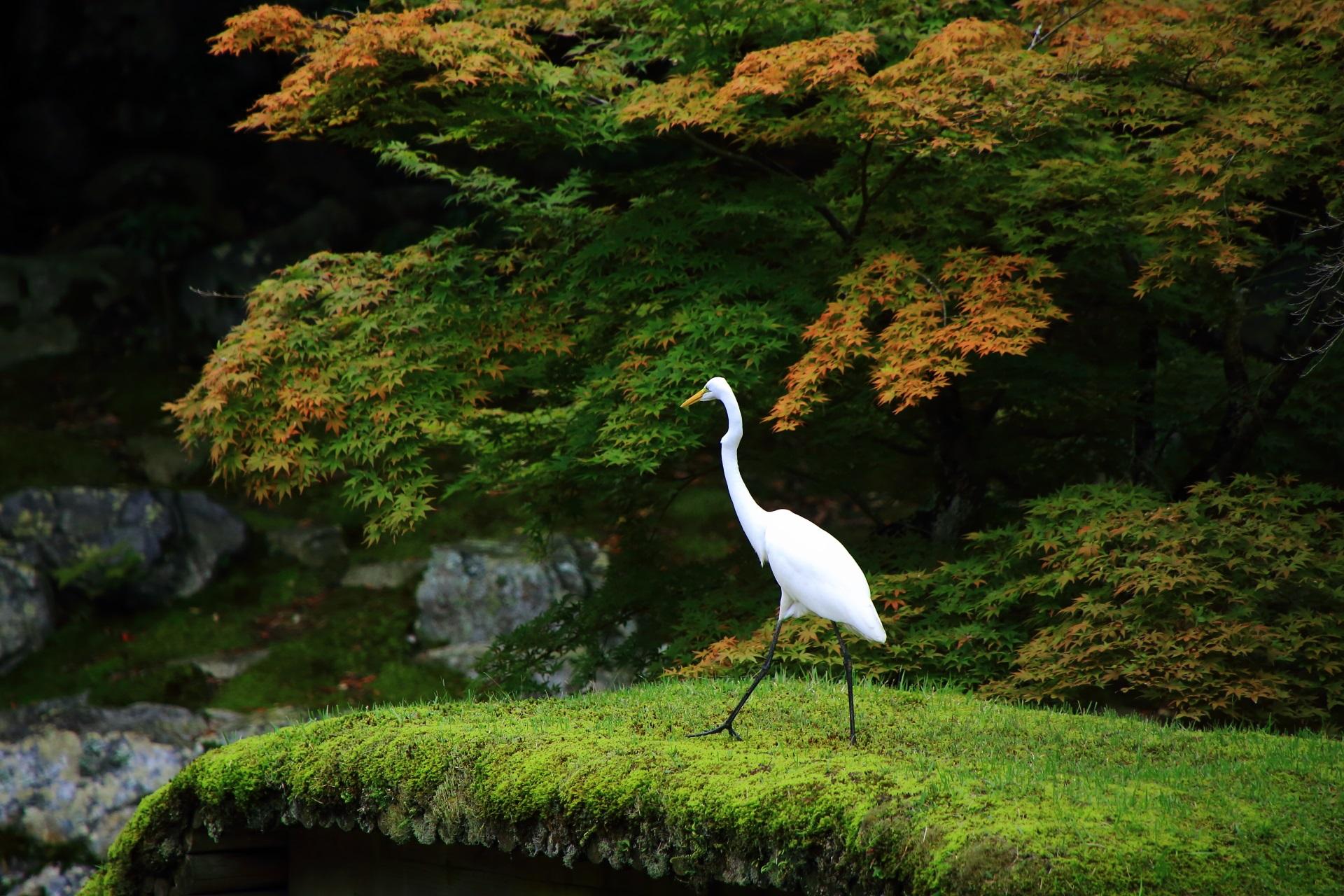 白鷺と三宝院庭園