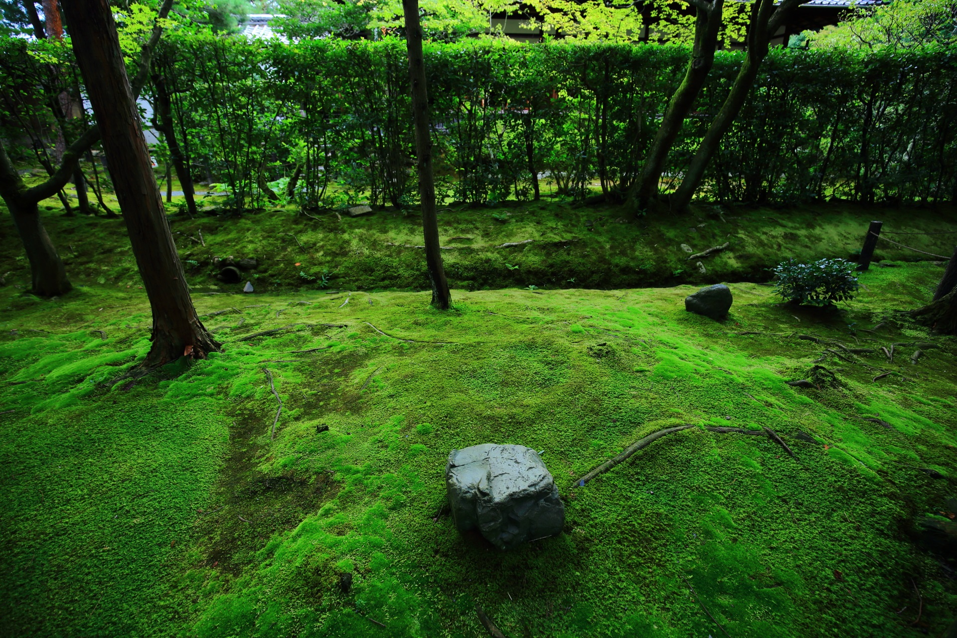 真如の庭の南側にある苔庭