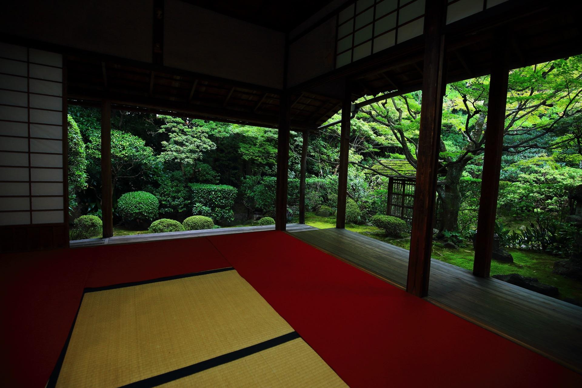 茶室につながる露地庭の侘の庭