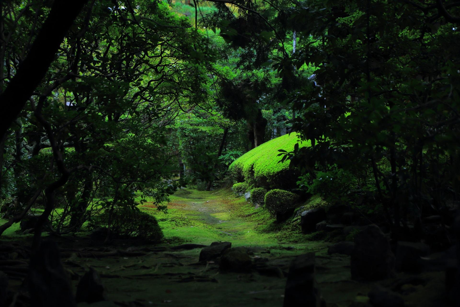 真如の庭の鮮やかな緑のツツジ