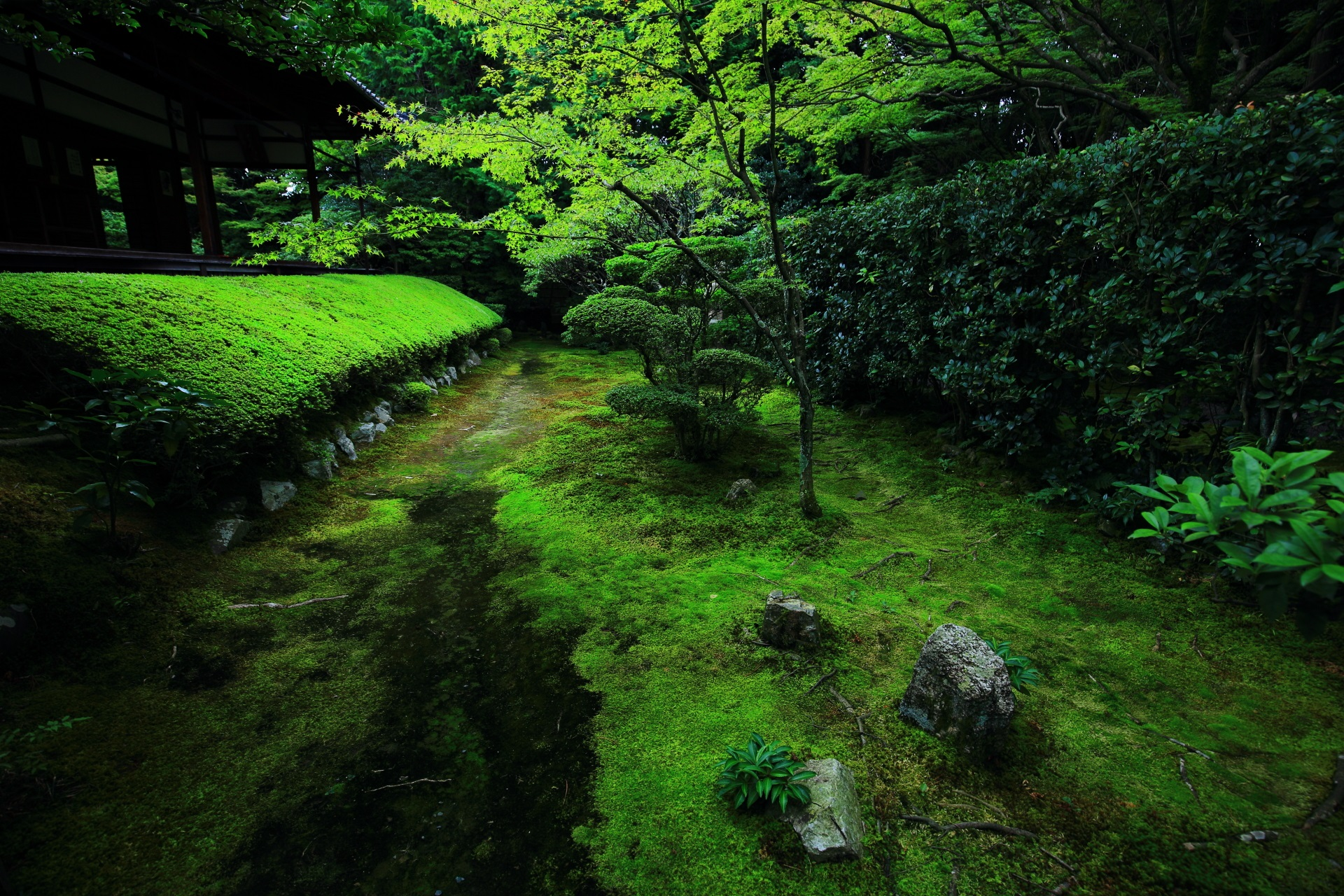真如の庭の美しい緑のツツジ
