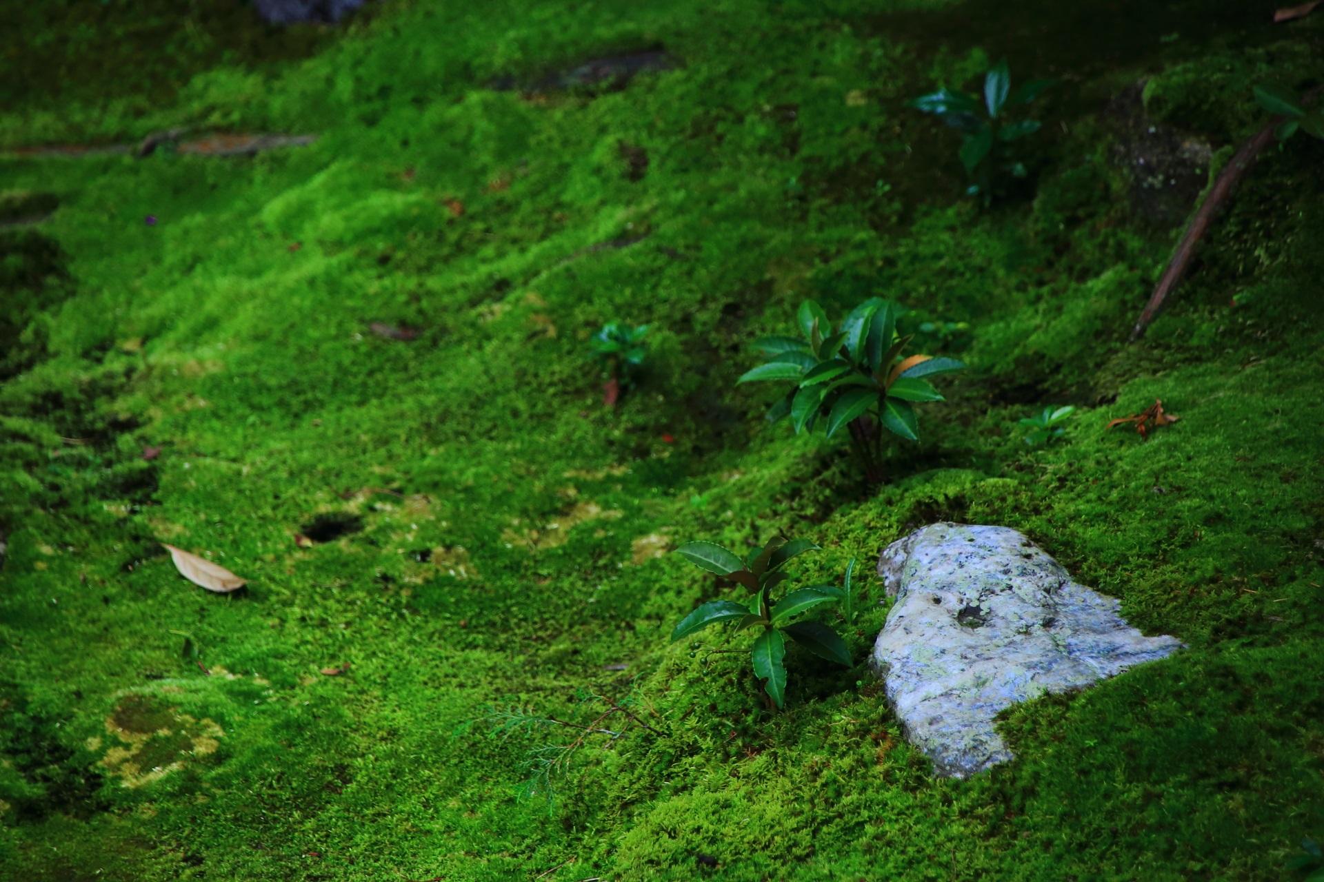 思惟の庭の美しい苔や緑