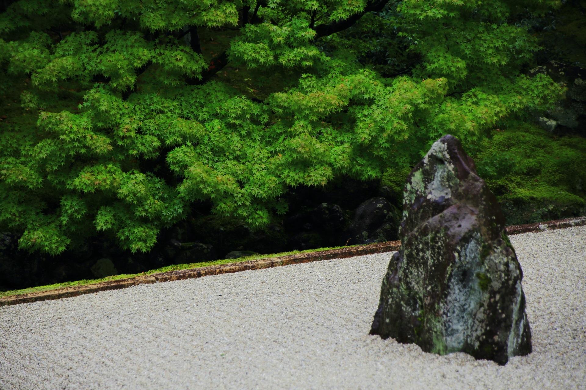 美しい青もみじにつつまれた相国寺の枯山水庭園
